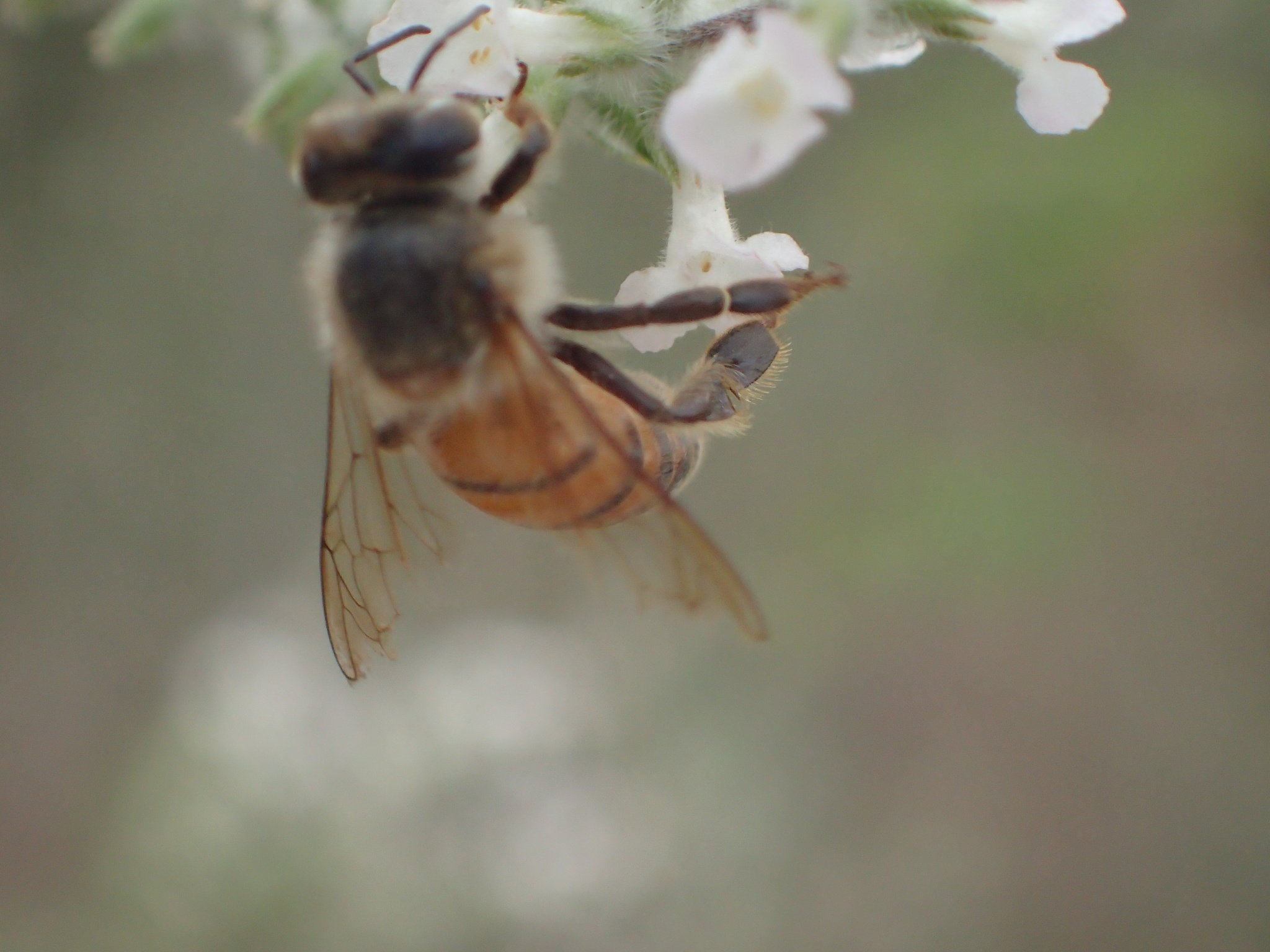 Busy Bee by sean.manion.9