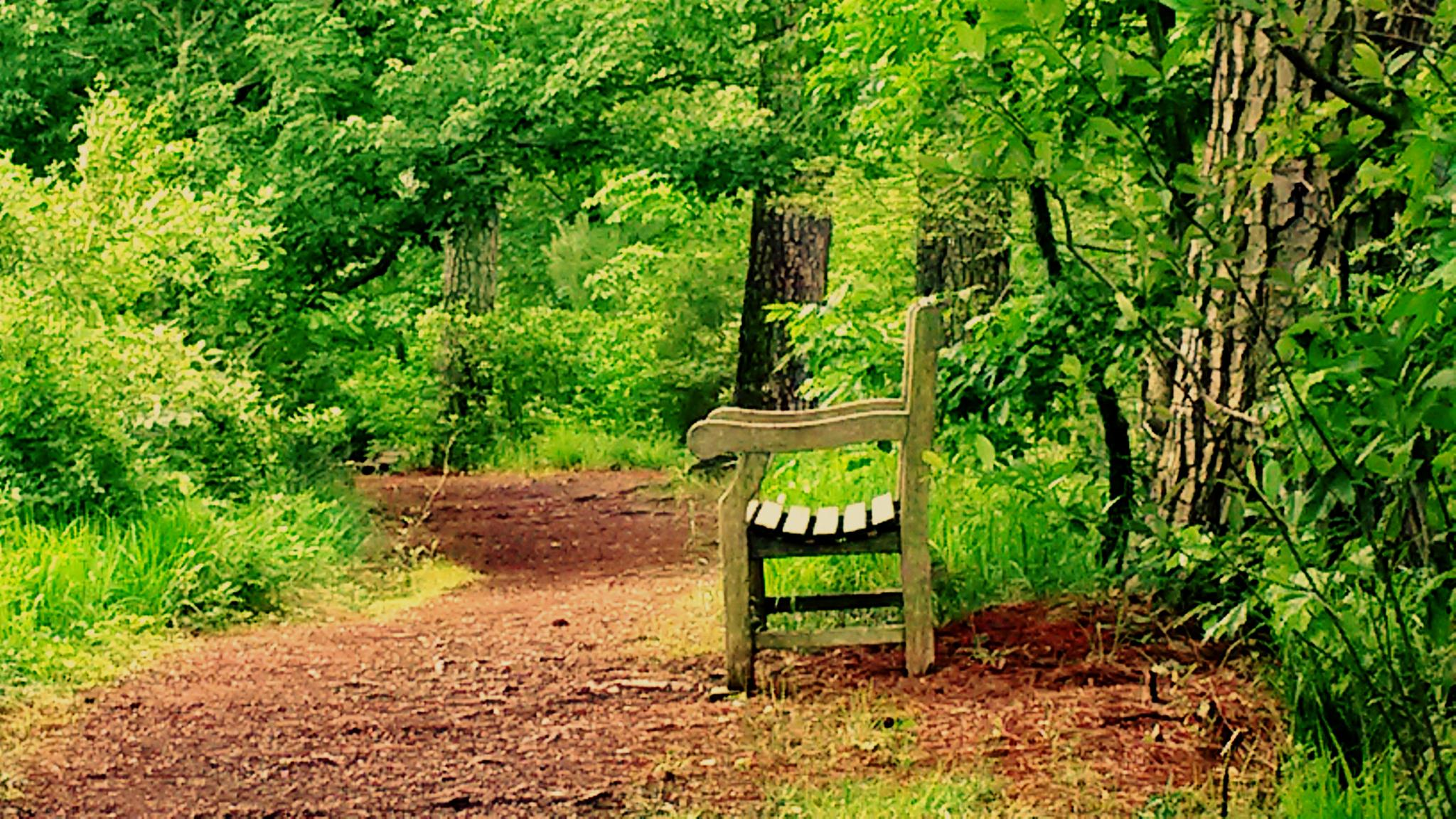 Photo in Landscape #woods #foliage #trees #tree #path #pathway #outdoors #bench