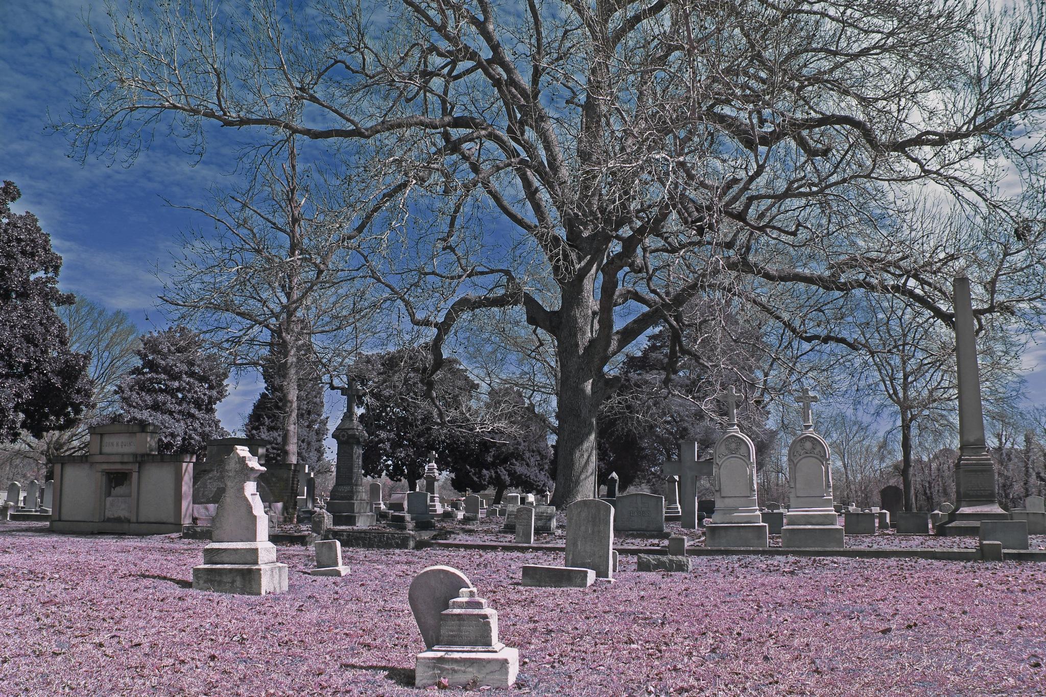 Cemetery by Jennifer Stafford