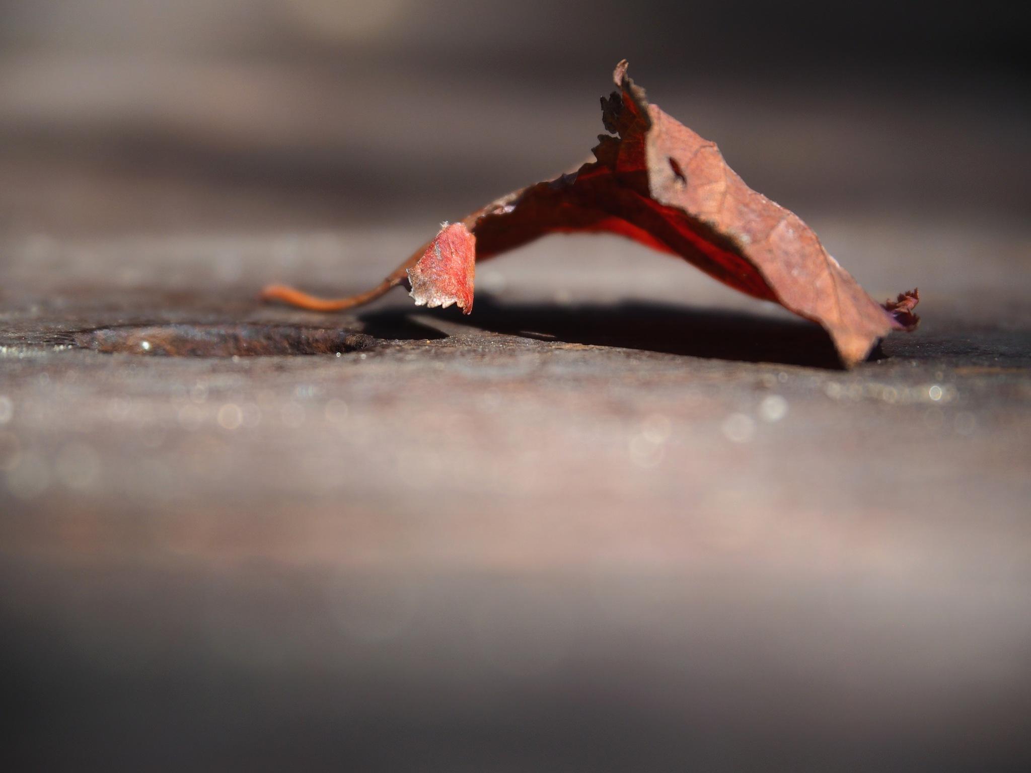 Leaf! by isreis64