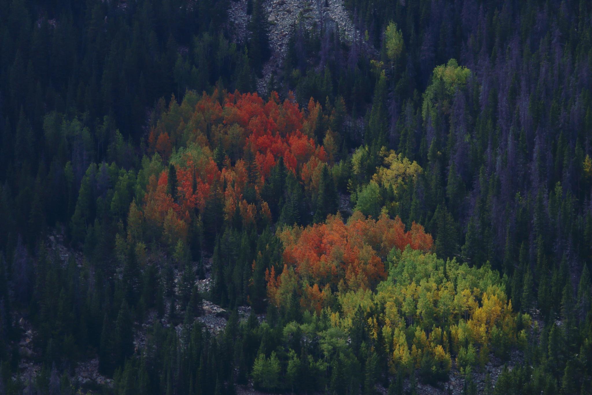 Last Pocket of Color by daniel.luna.77920