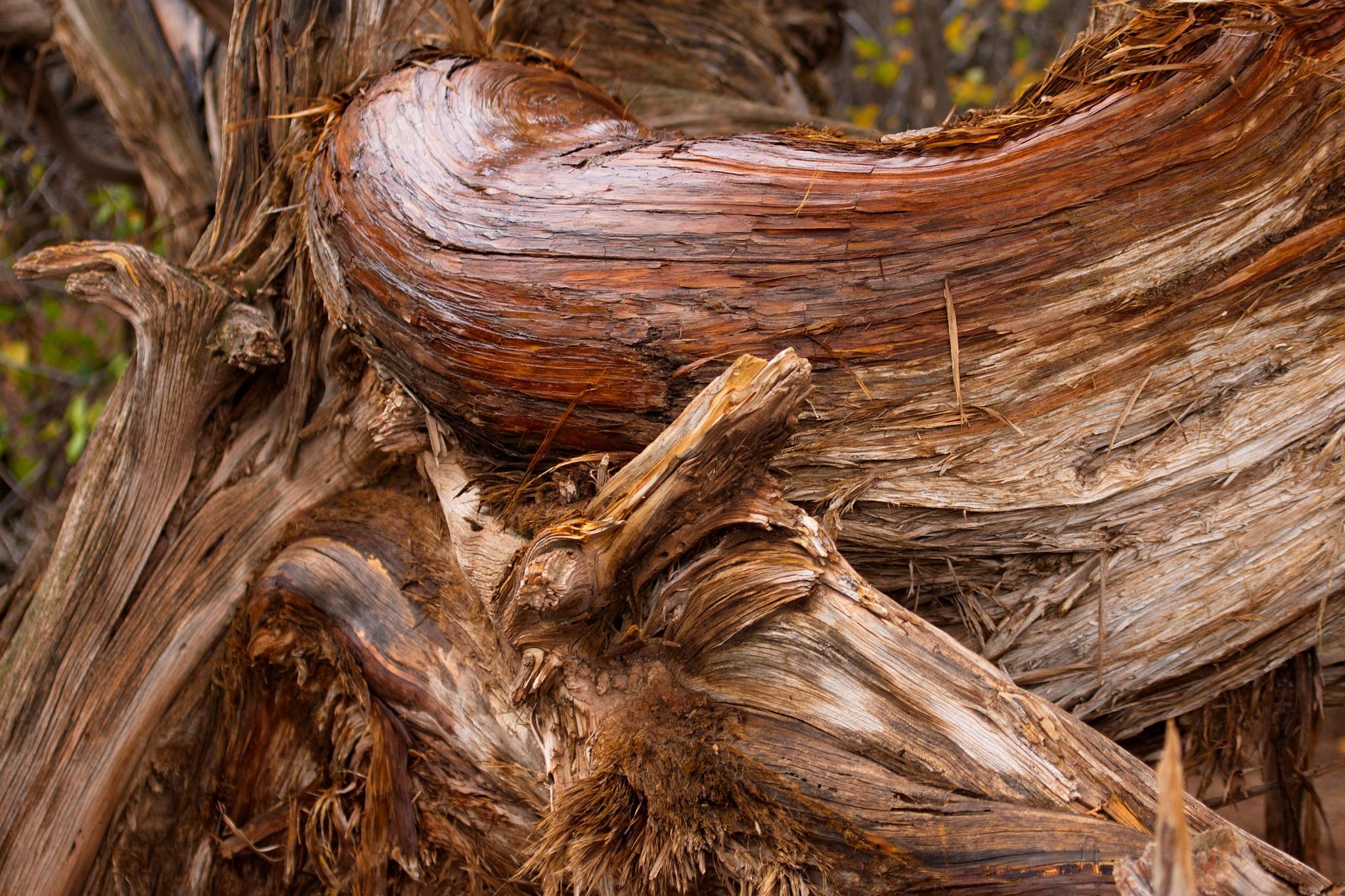 Cedar by daniel.luna.77920