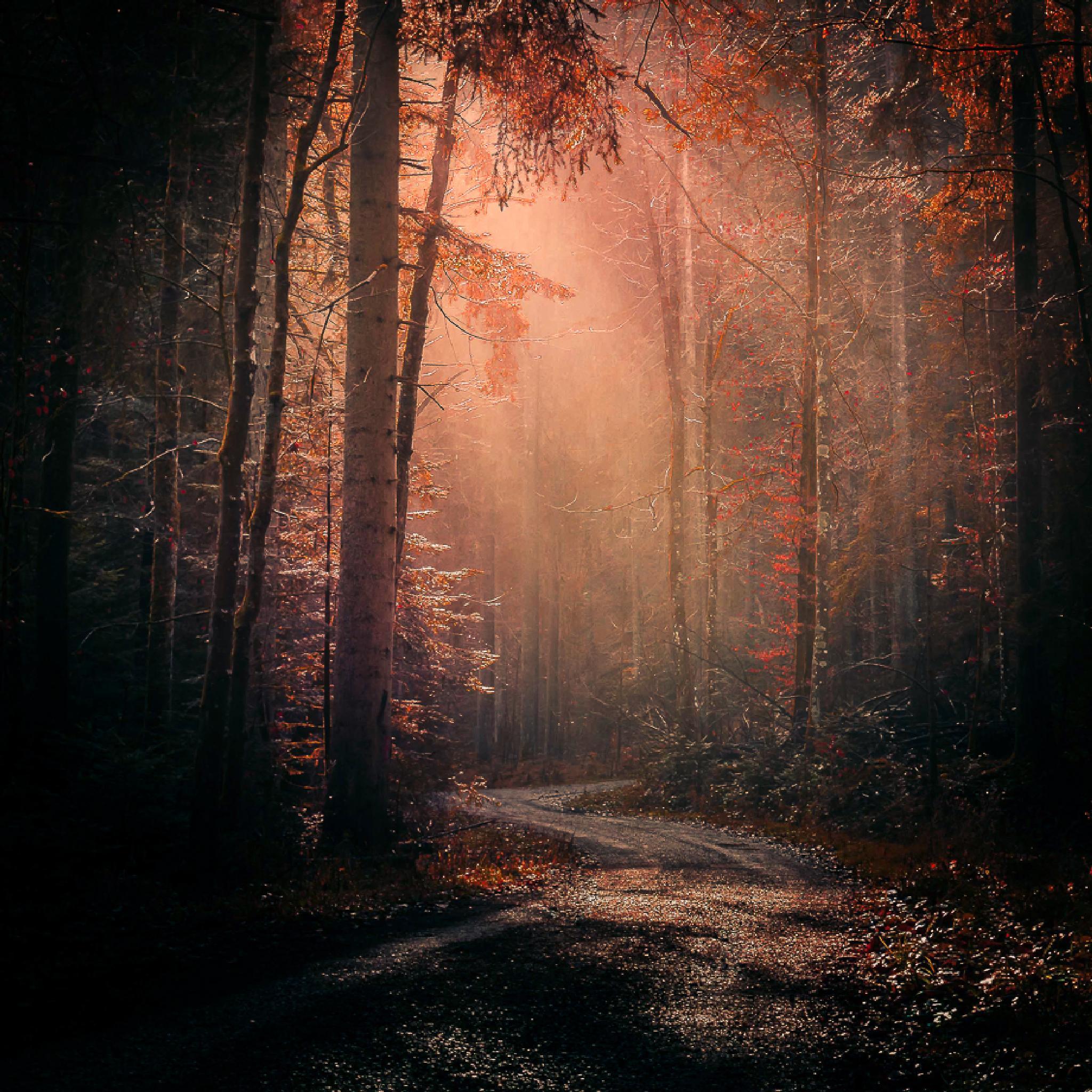 Autumn Will Fall... by alex.schoo