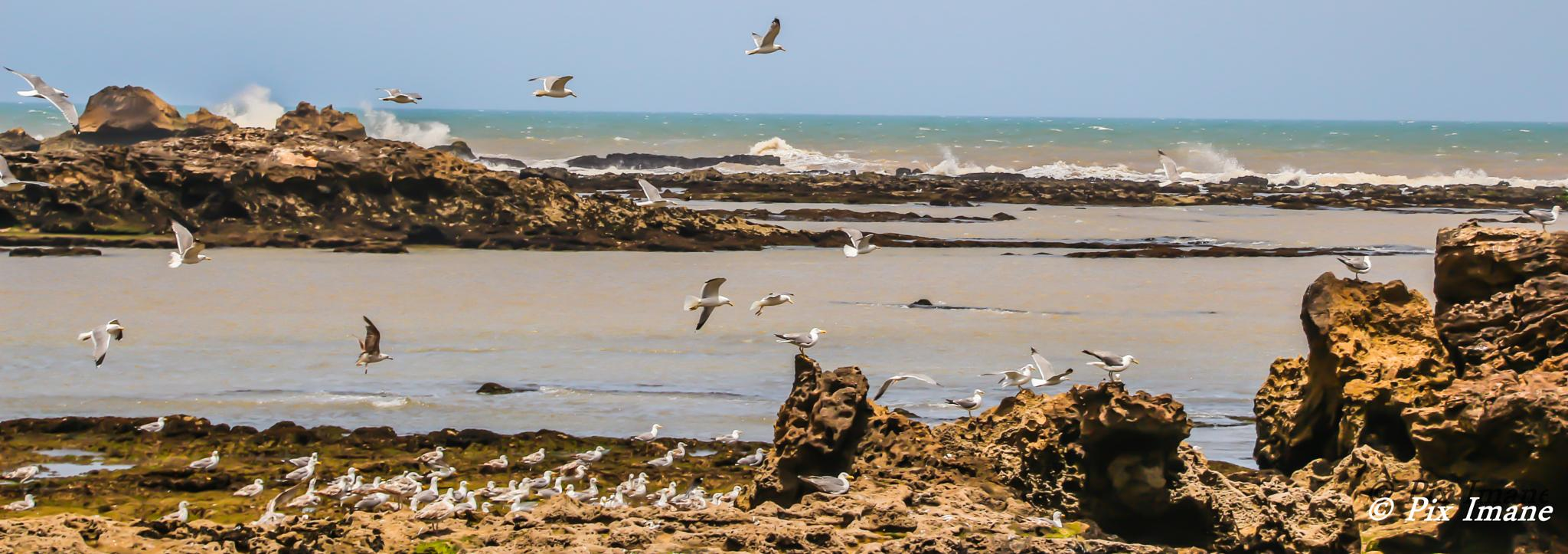 Photo in Travel #seagull #essaouira #morocco #bird #animal #travel
