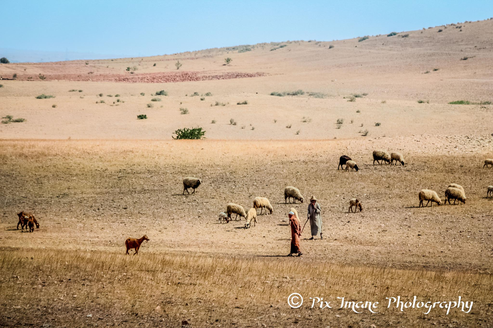 Sheepherd in Morocco by PixImane Photography