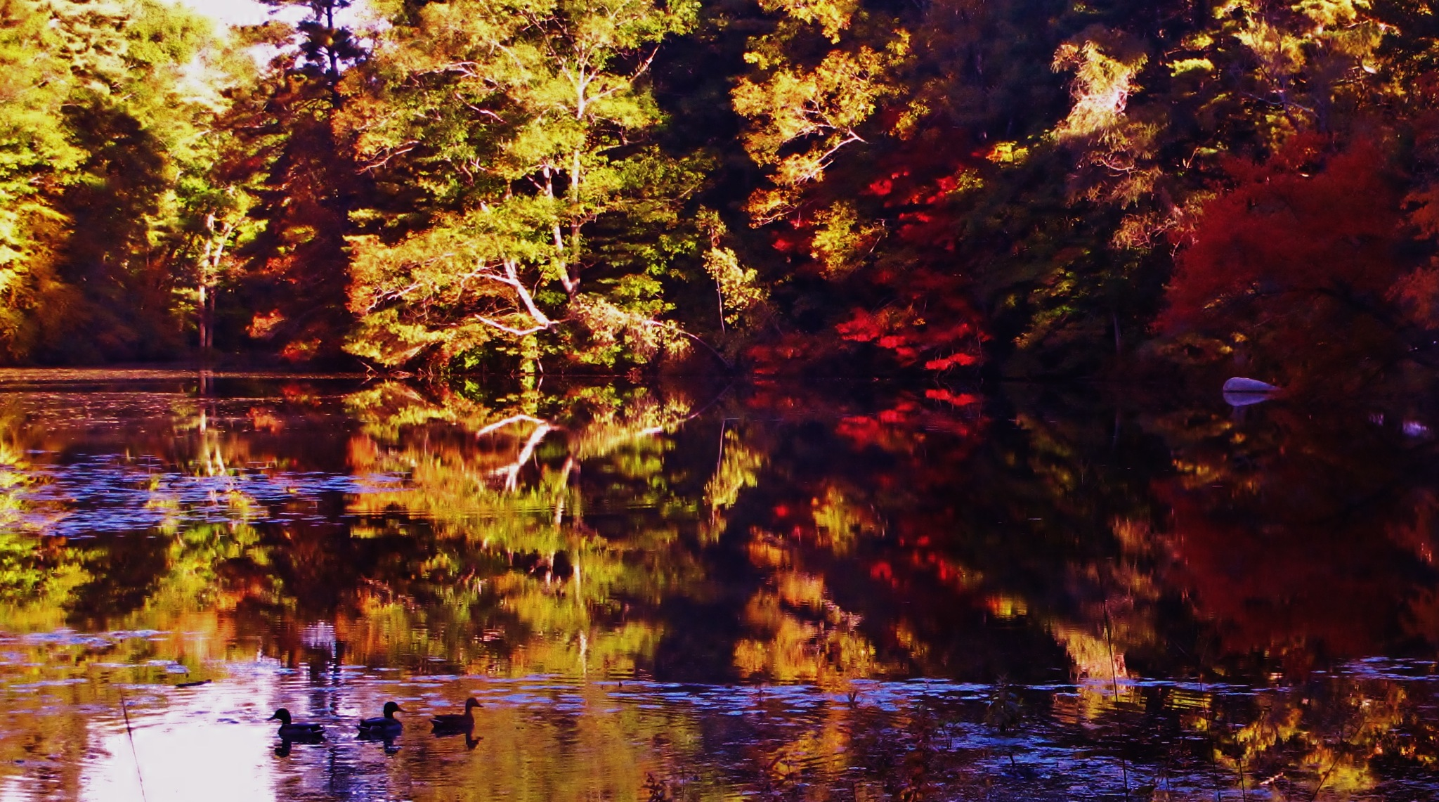 fall on the pond by paulcrimi178