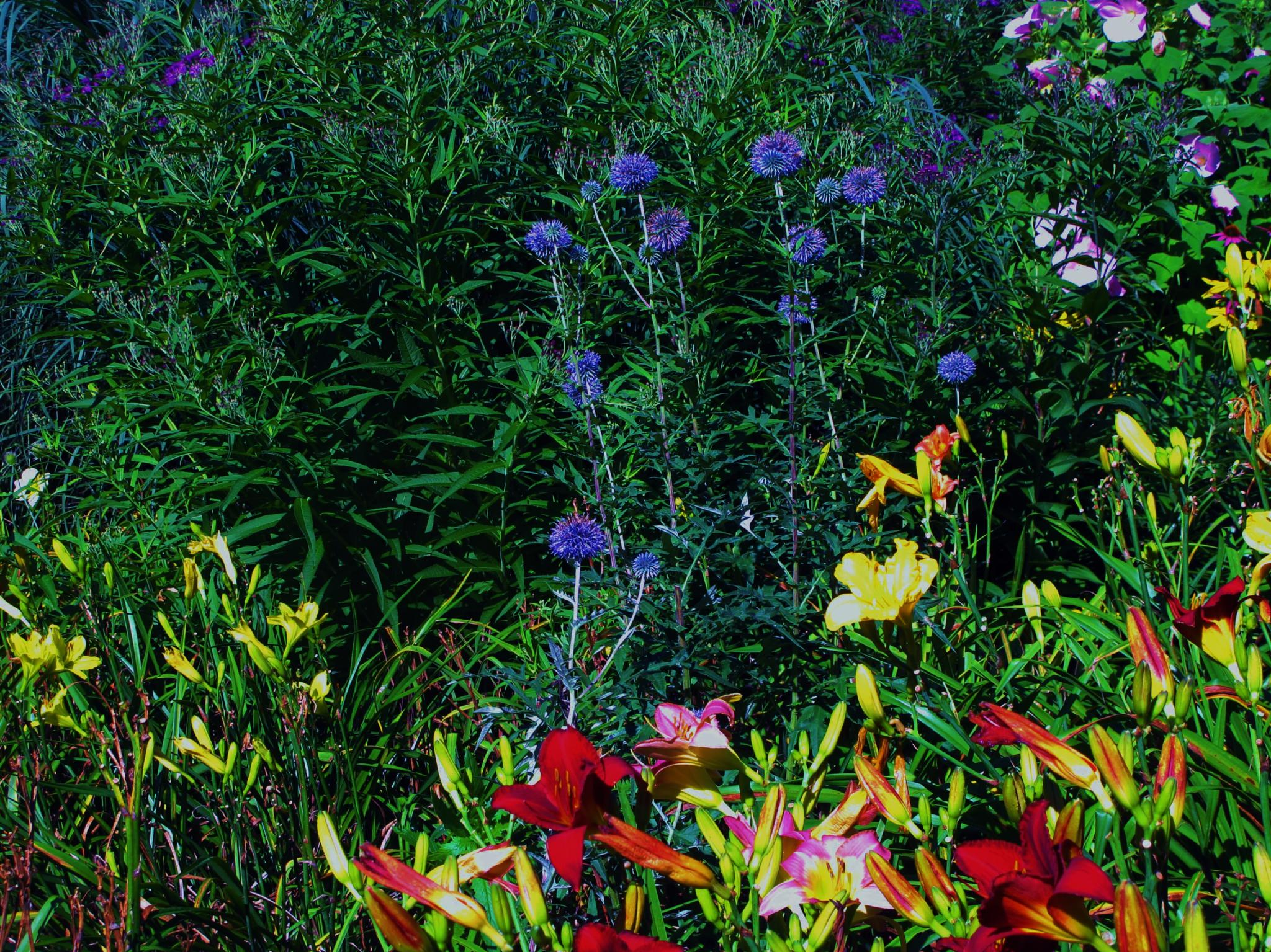 the garden by paul crimi.  by paulcrimi178