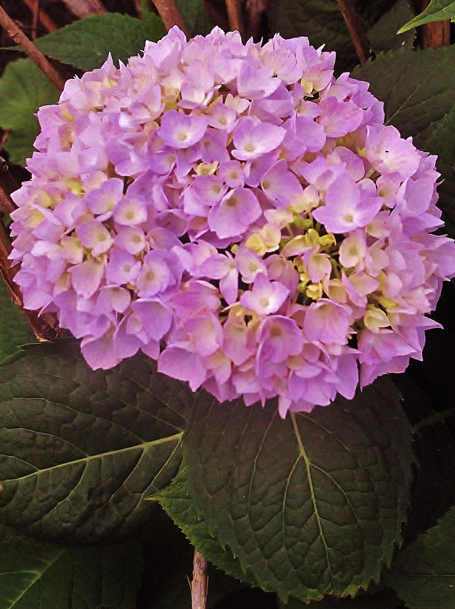 flower by paulcrimi178