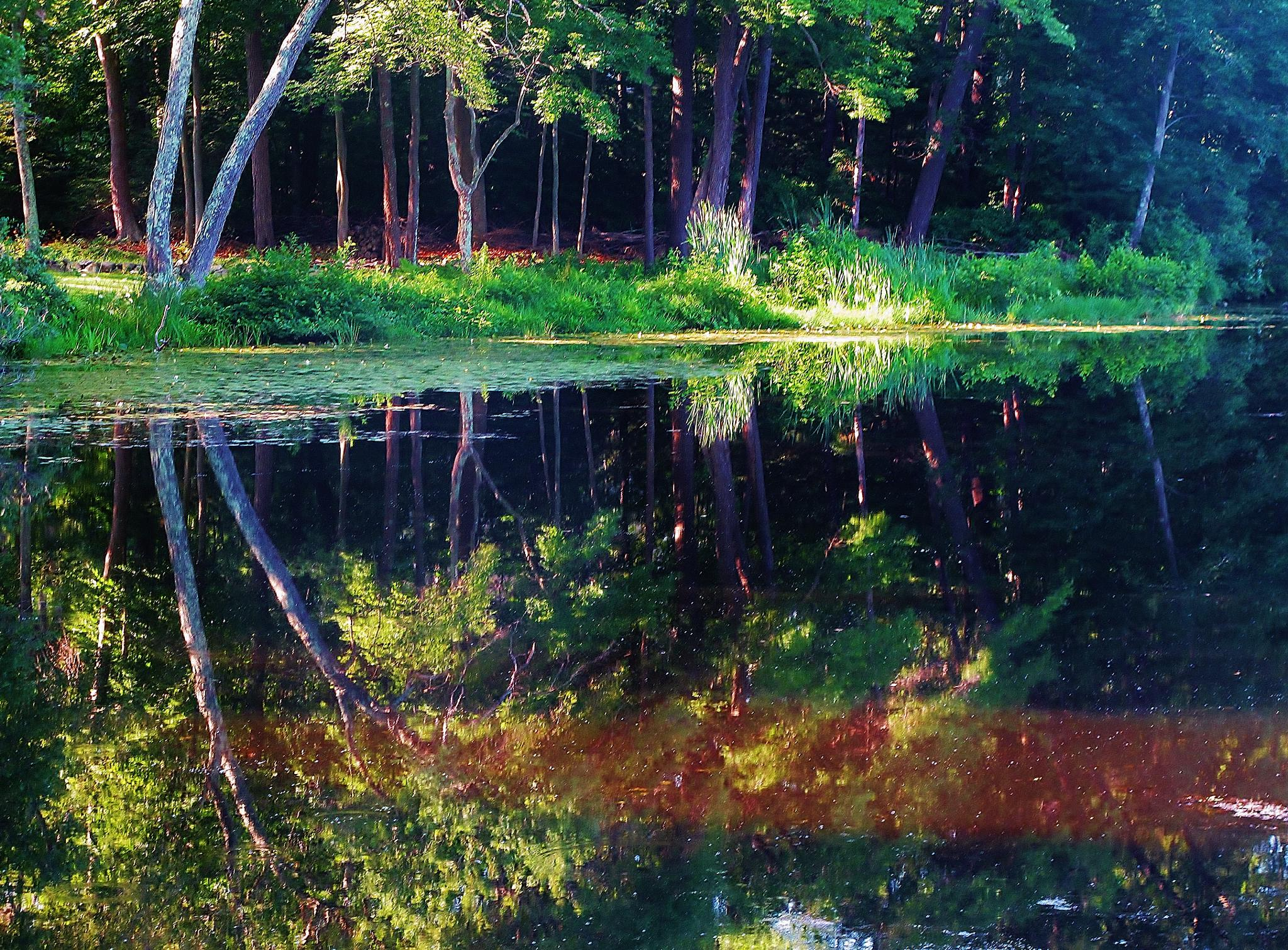 Photo in Nature #www.paulcrimifinearts.comwater