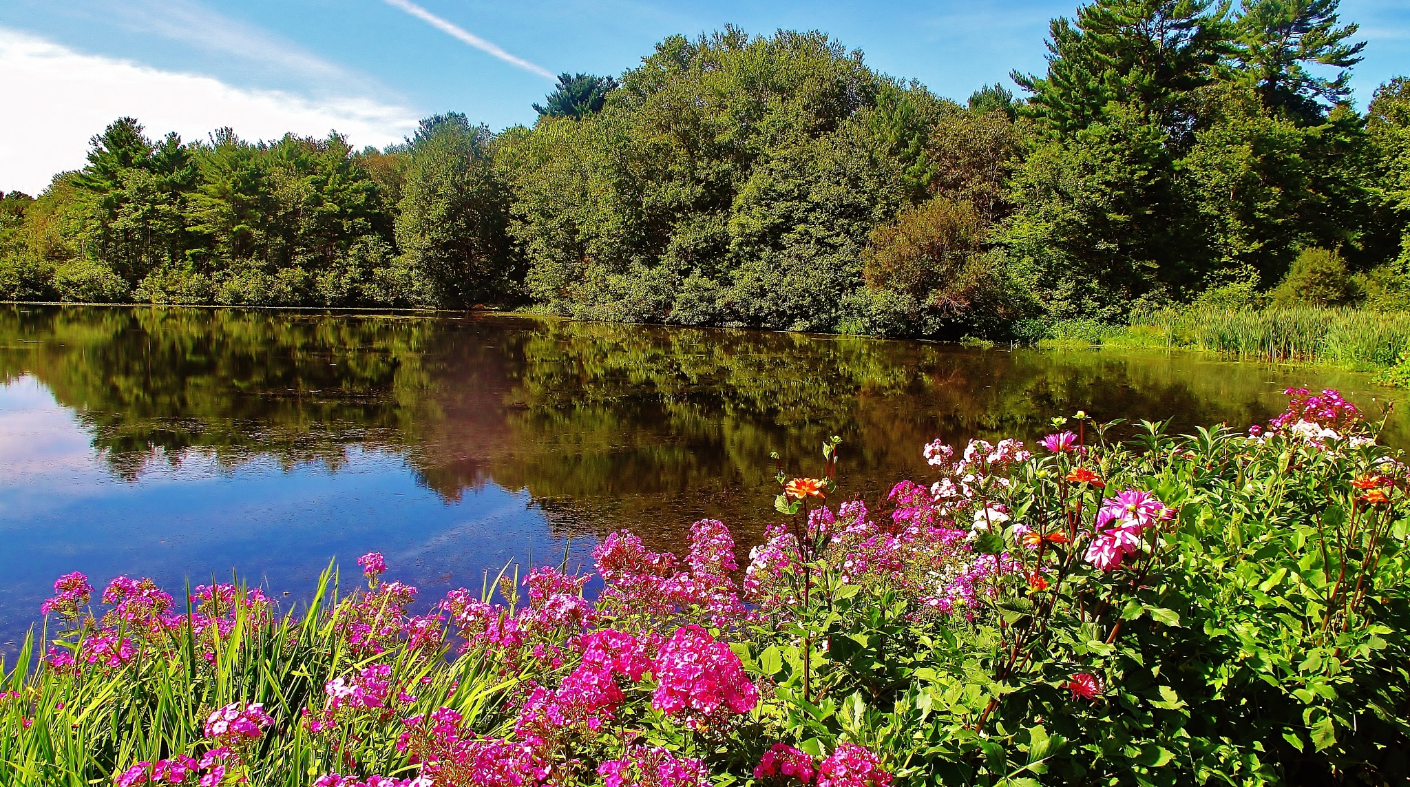 flower garden by the pond . by paulcrimi178