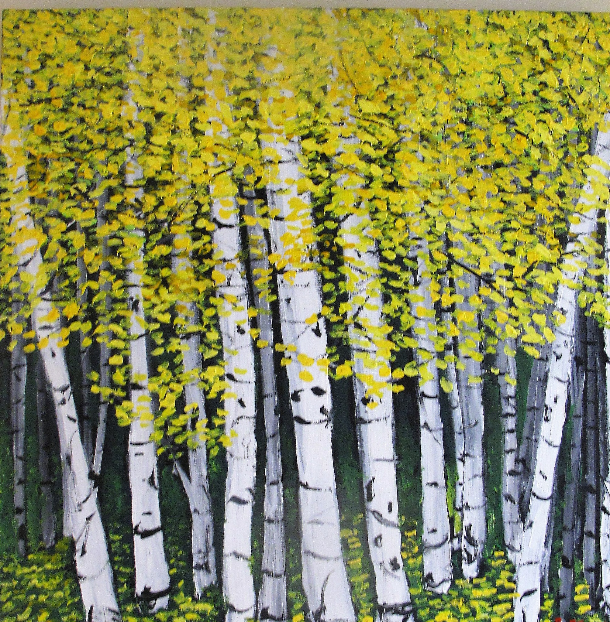 fall birch trees by paulcrimi178