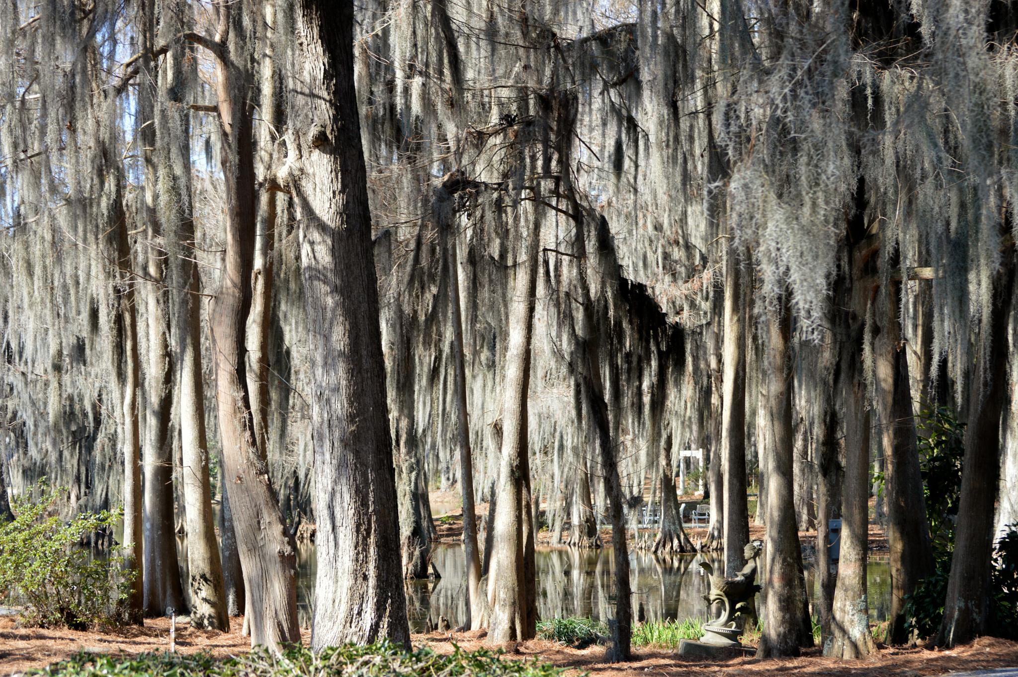 Photo in Random #winter tree #moss #winter #trees in winter #winterrelections
