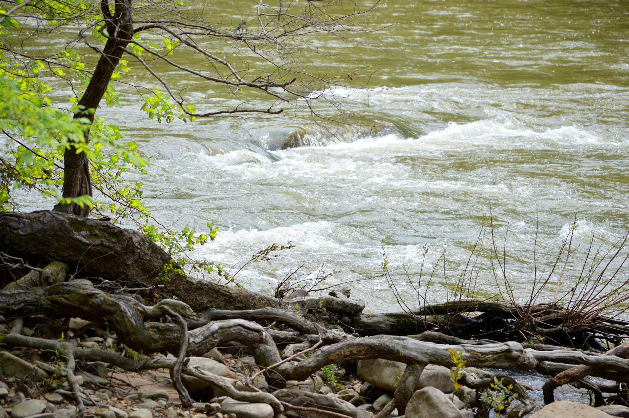 river roots by celeni.sasser