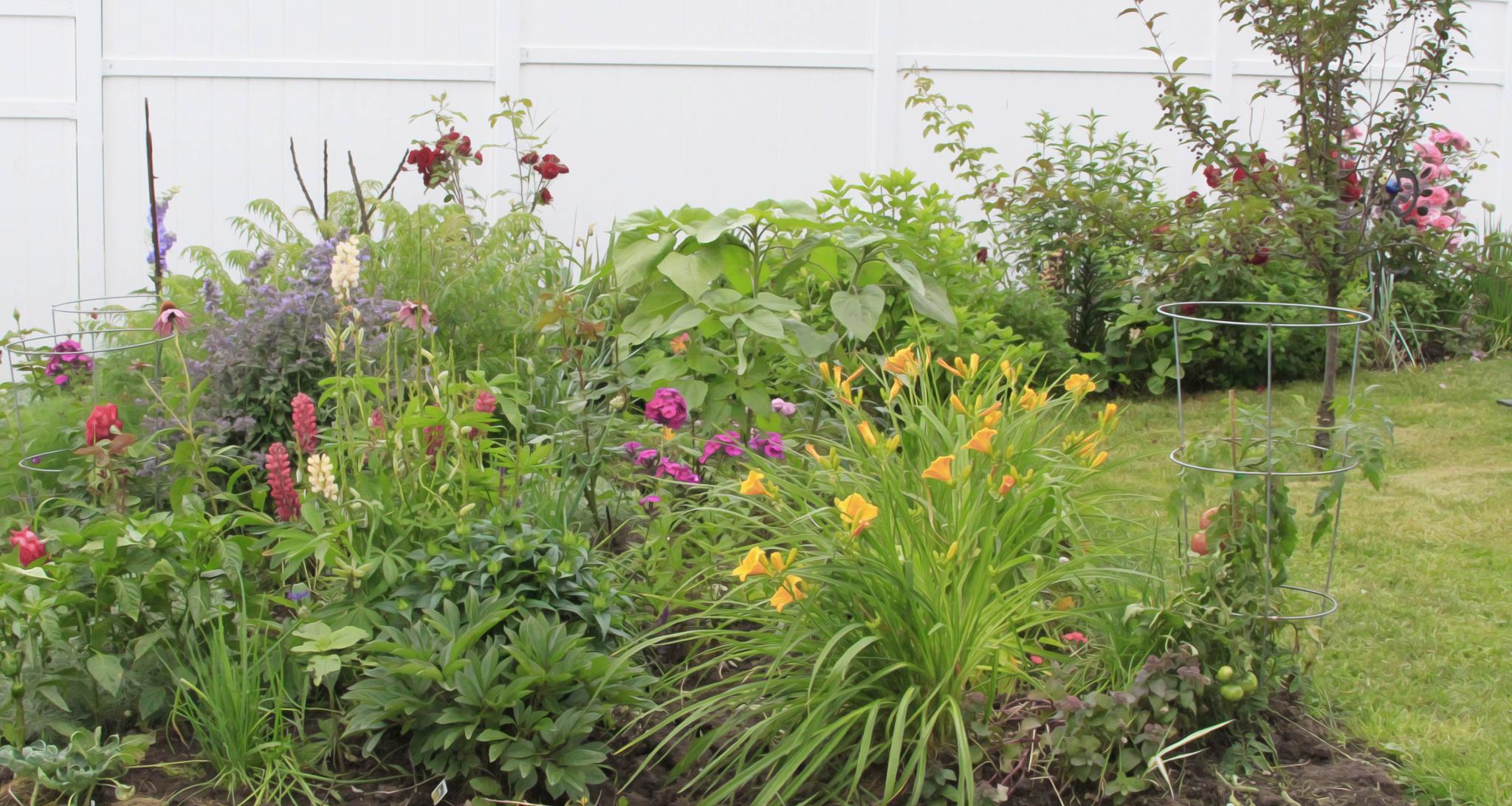 Garden in 2014 by TMM