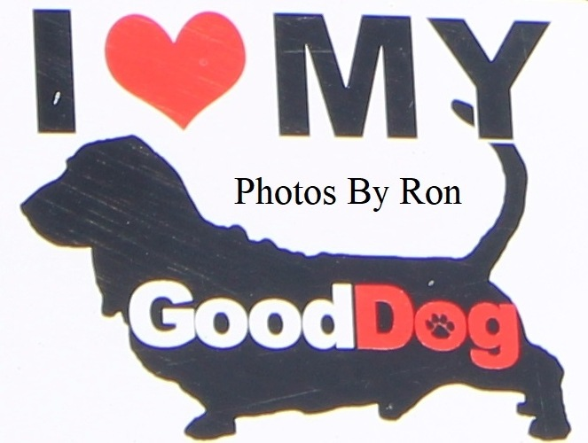 """Good Loving"" by Ron Berkley"