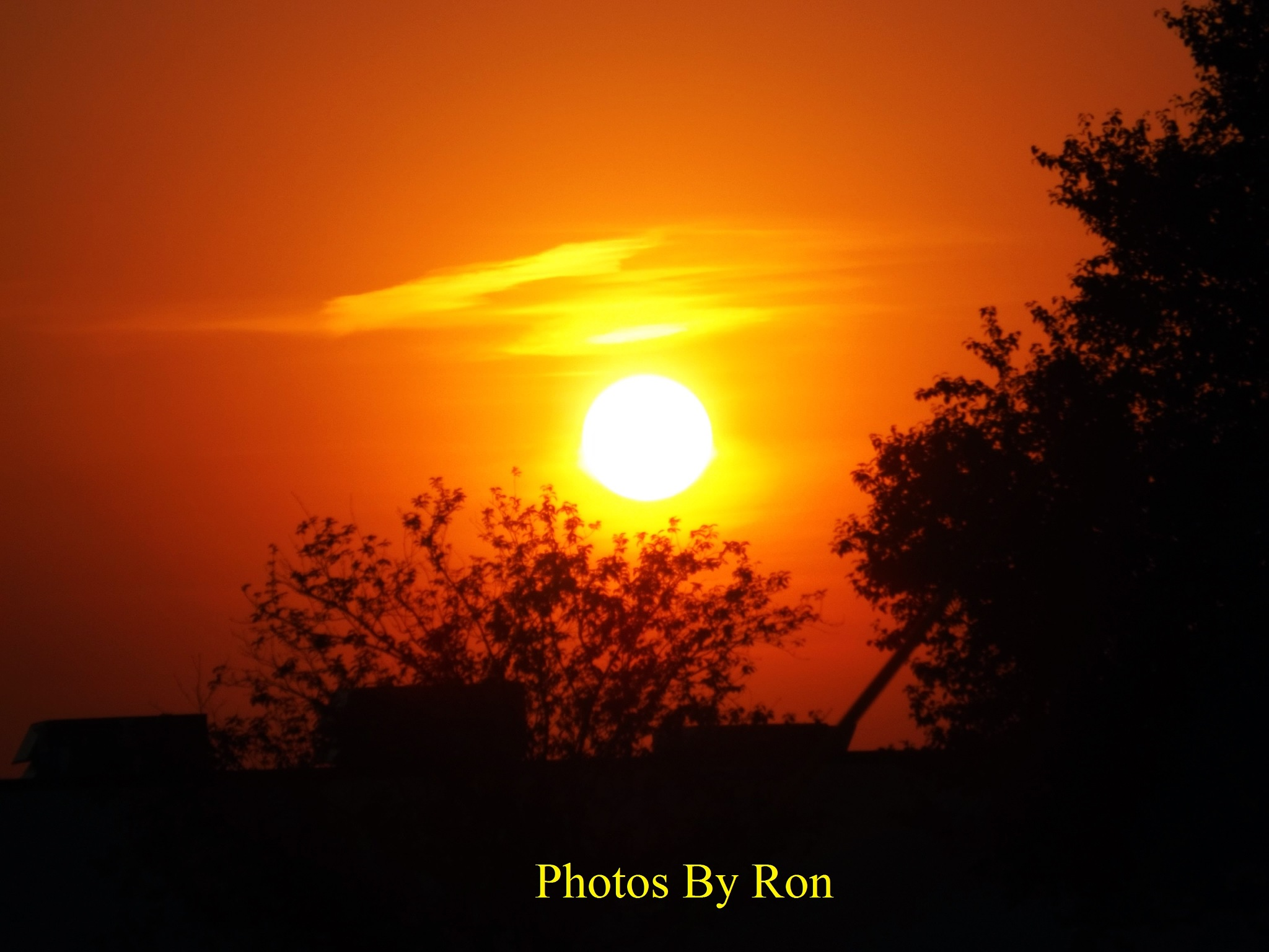 """Sun Kissed Tree"" by Ron Berkley"