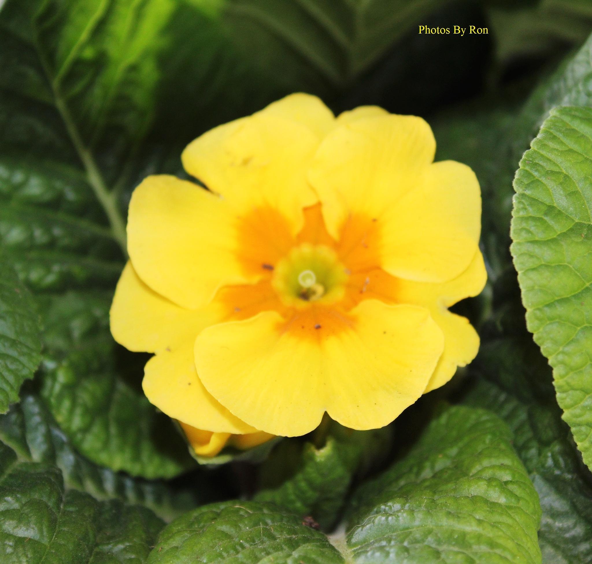 """Spring Sherbet"" by Ron Berkley"