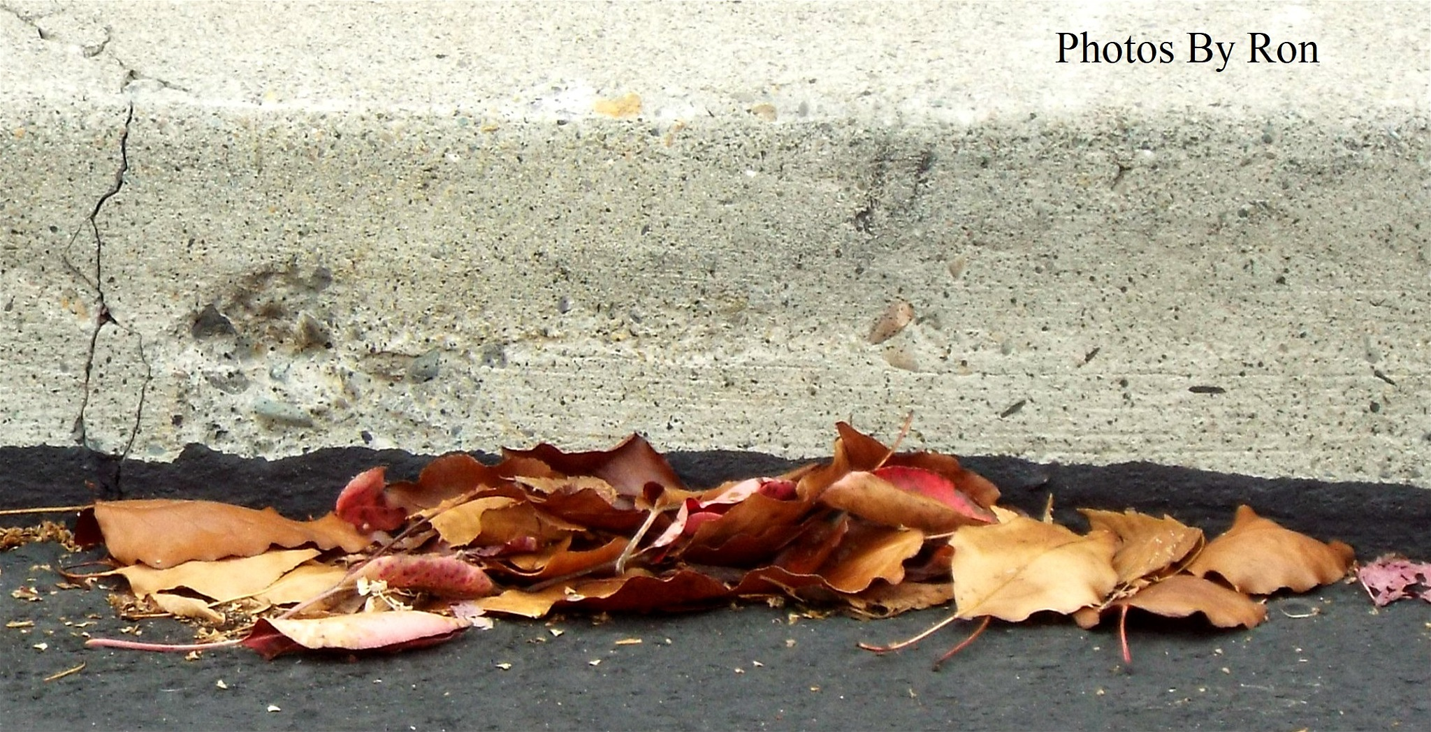 """""""Up Against The Curb!!!!""""  by Ron Berkley"""