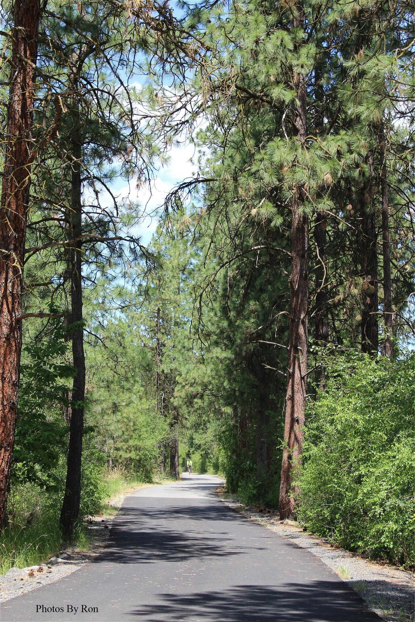 """Corridor Through The Forest"" by Ron Berkley"