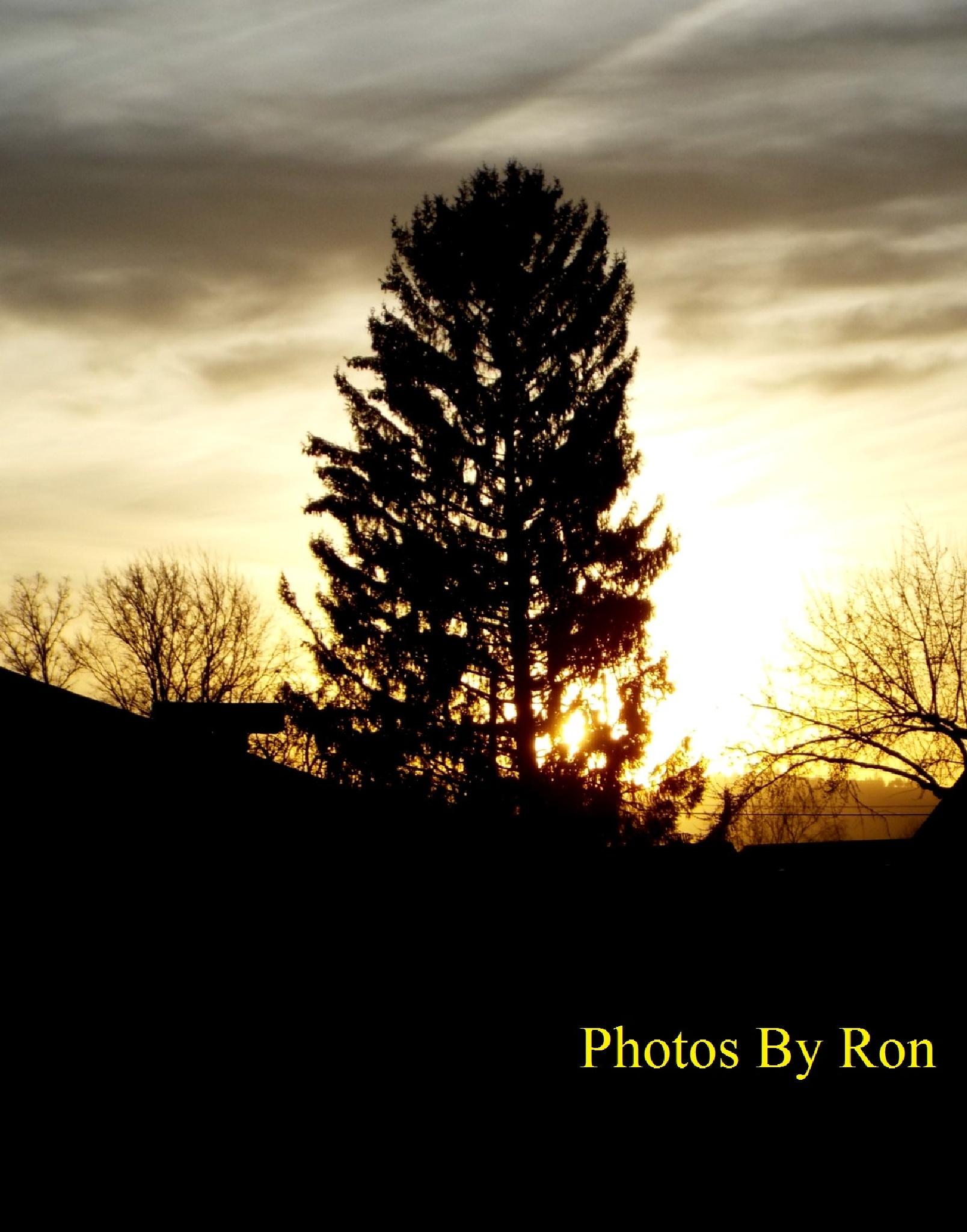 """Sentinel Sunset Tree"" by Ron Berkley"
