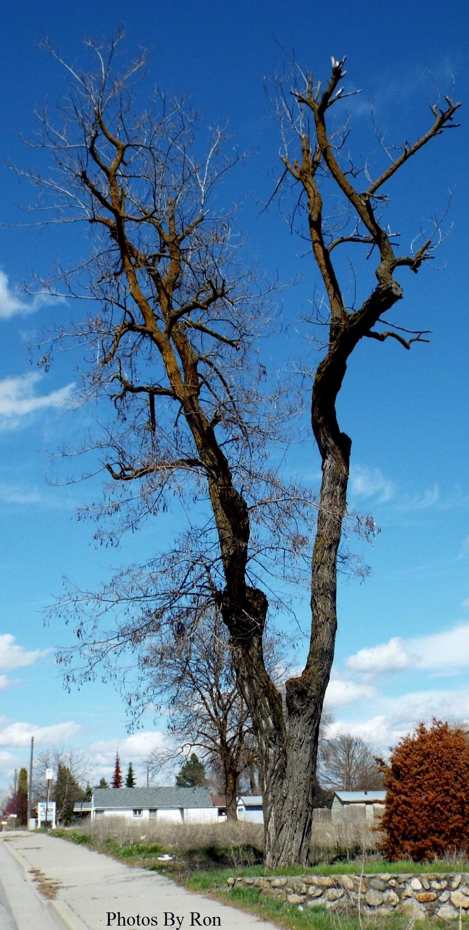 """Tree Fork"" by Ron Berkley"