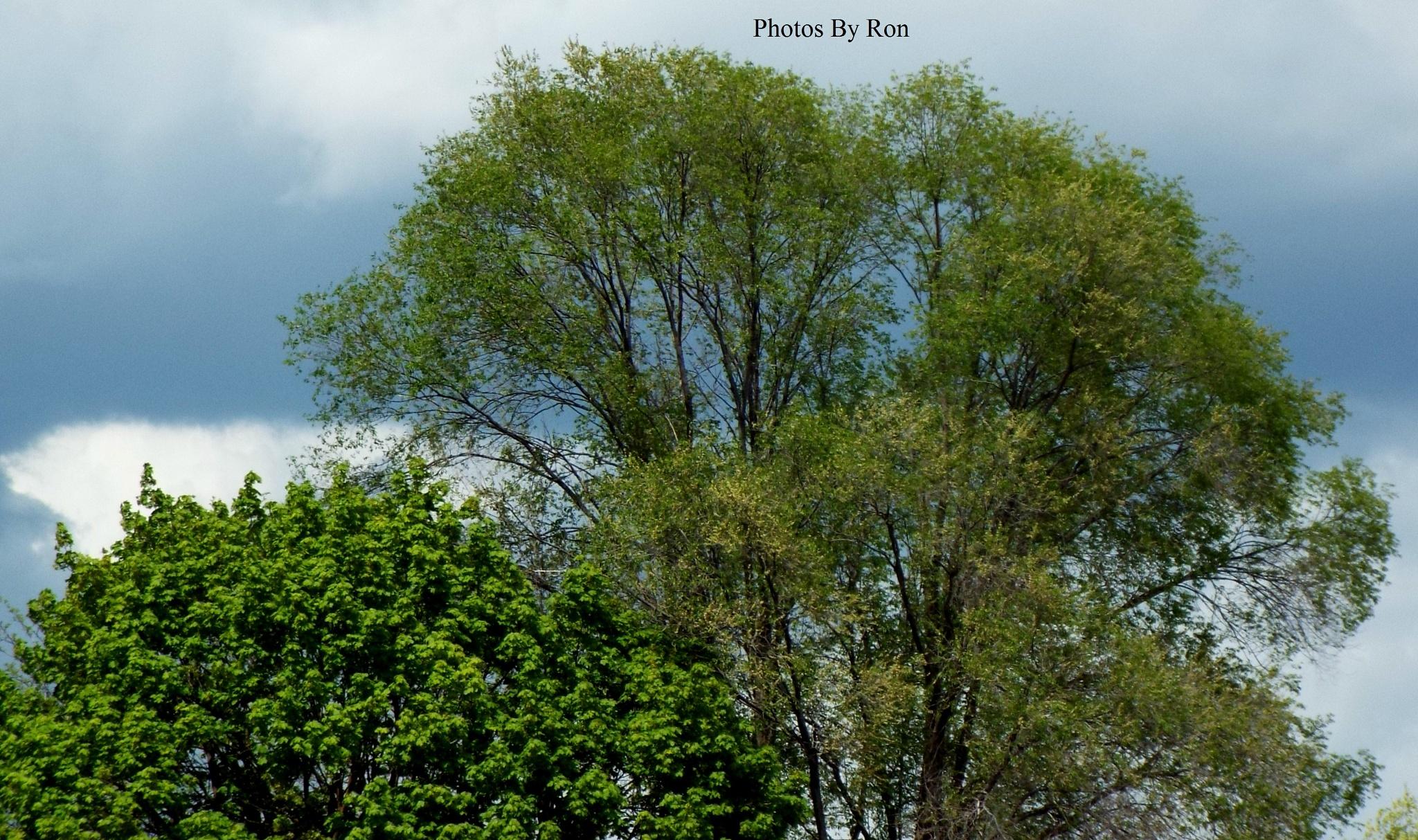 """""""Gray Backdrop"""" by Ron Berkley"""