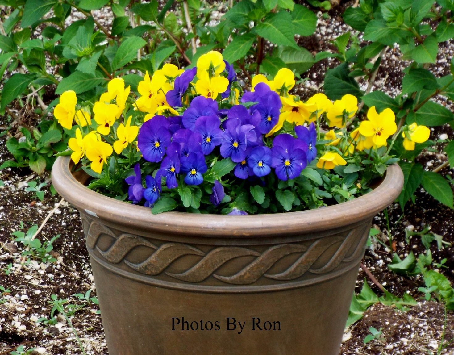 """""""Potted Glory"""" by Ron Berkley"""