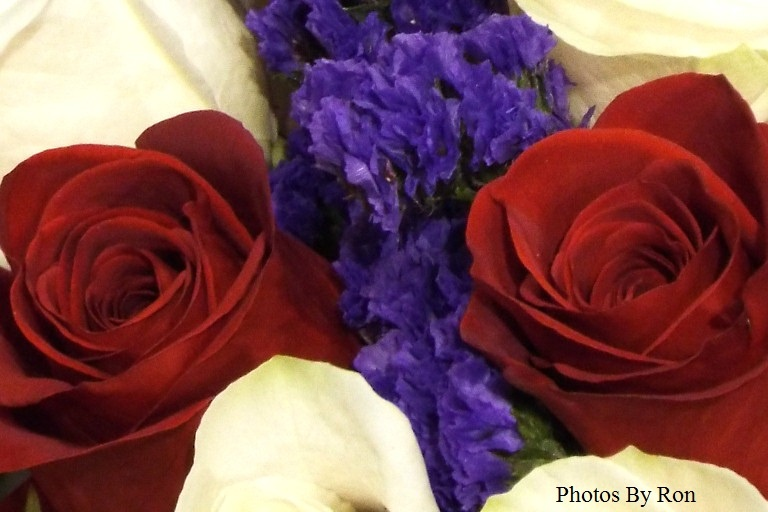 """Patriotic Roses Close Up"" by Ron Berkley"