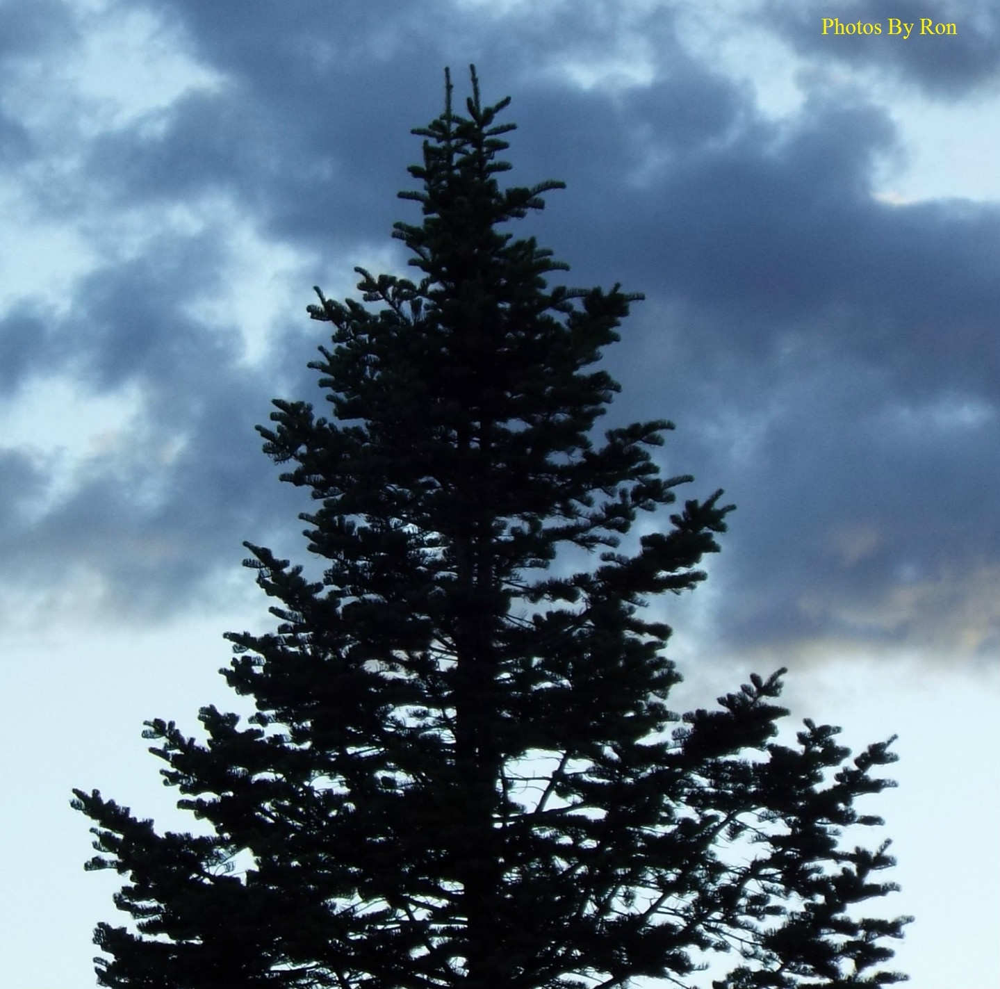 """""""Cloudy Pines"""" by Ron Berkley"""