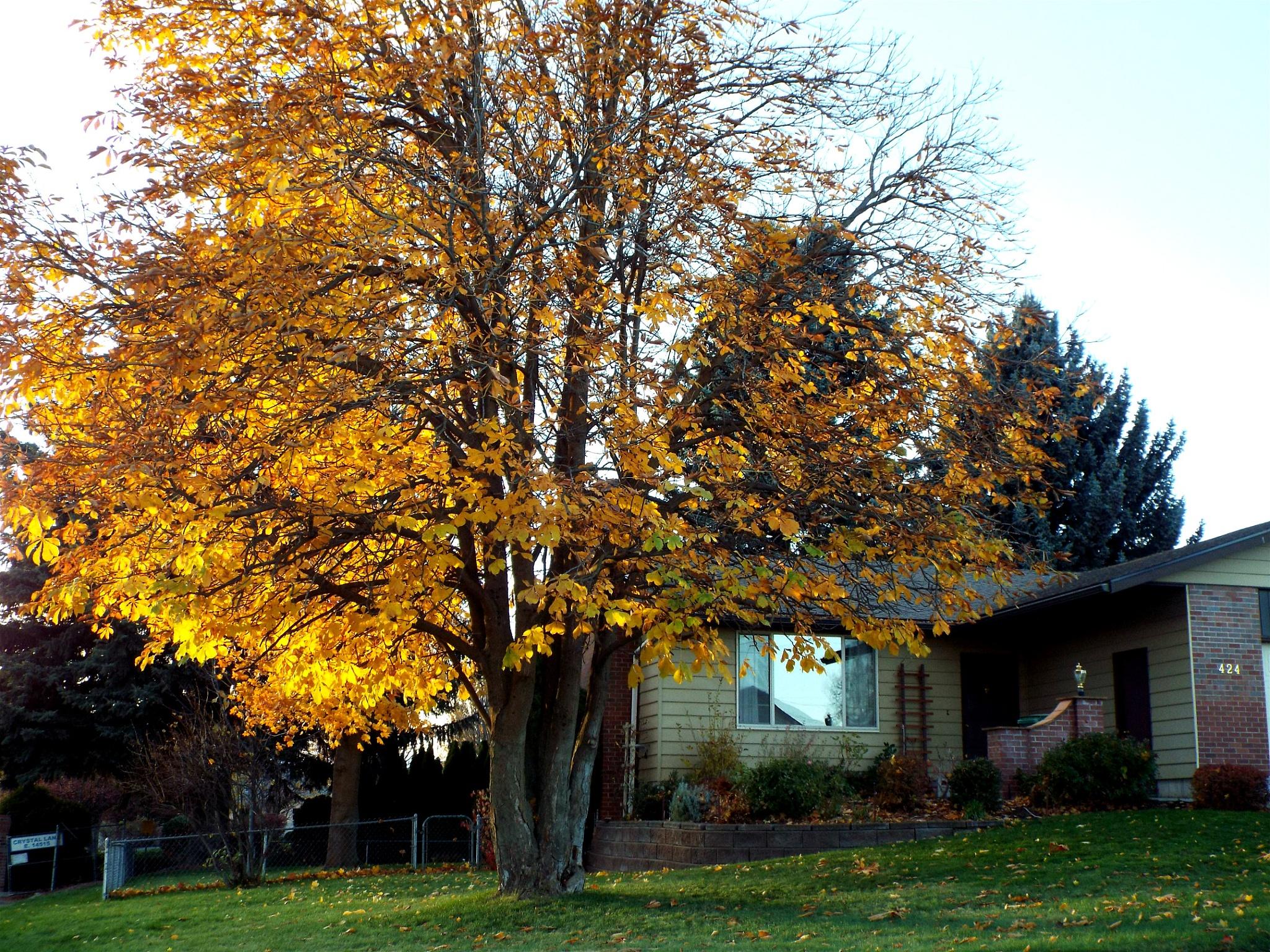 """""""More Autumn Colors"""" by Ron Berkley"""