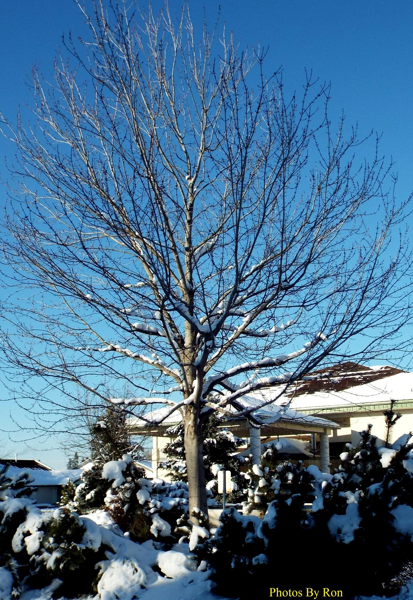 """Winter Skeleton"" by Ron Berkley"