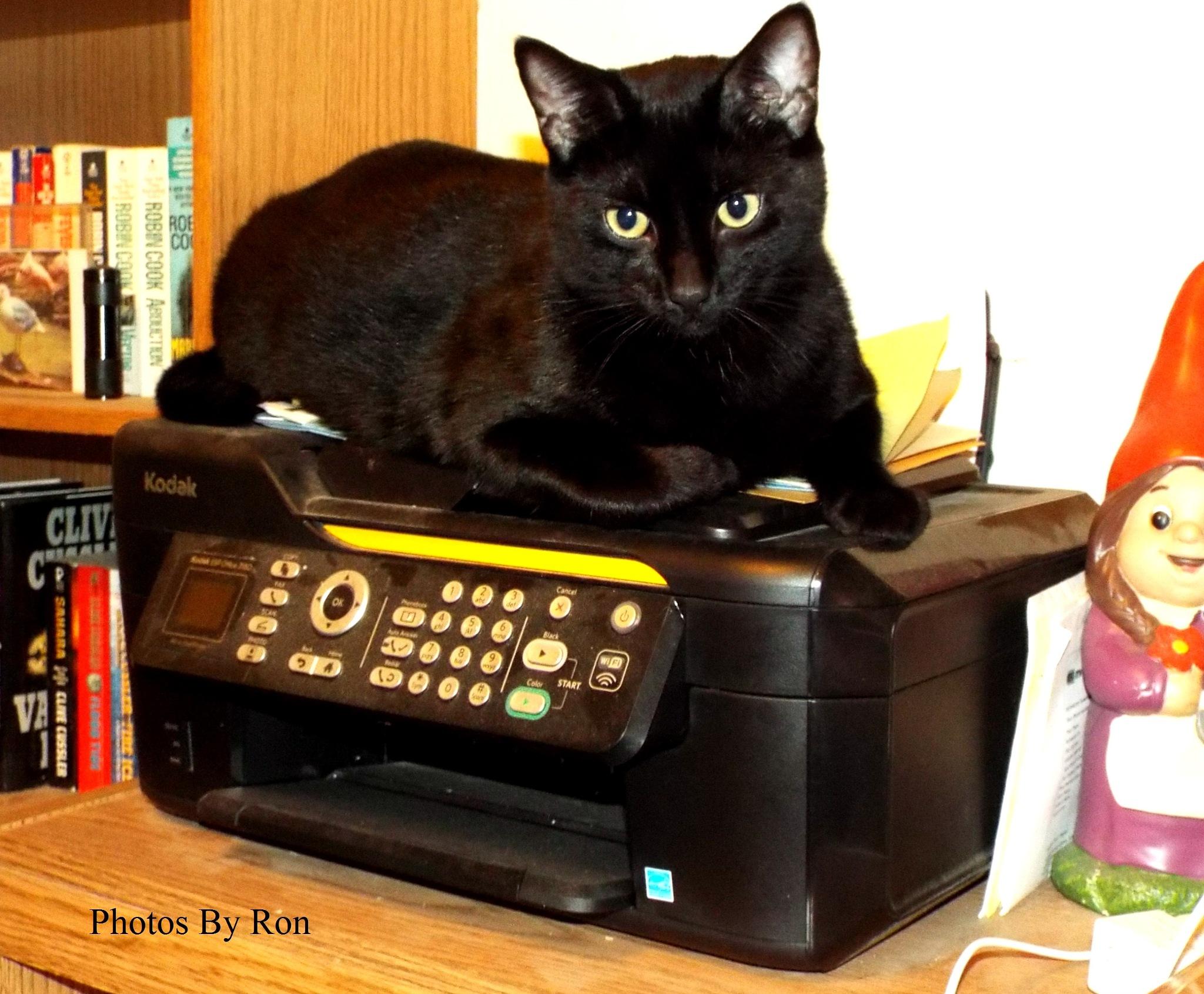 """Sage The Copy Cat"" by Ron Berkley"