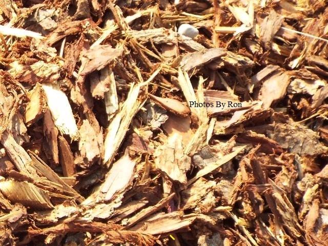 """Wood Chips"" by Ron Berkley"