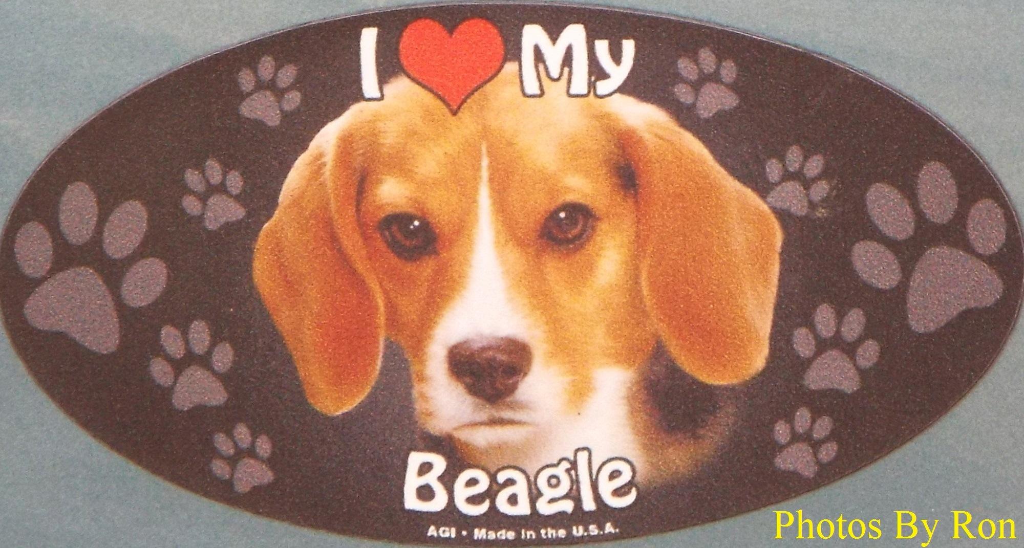 """""""Beagelly Love"""" by Ron Berkley"""
