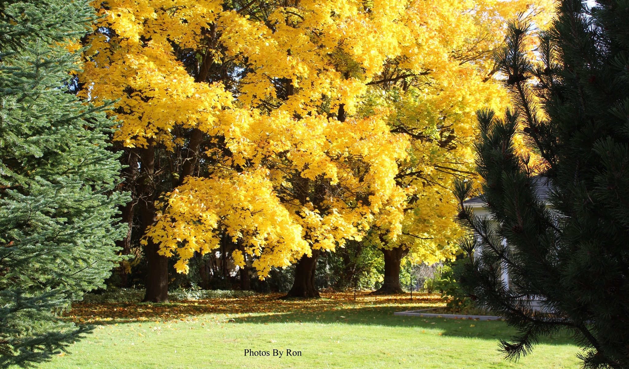 """Fall Color Shots For Today"" #2 by Ron Berkley"