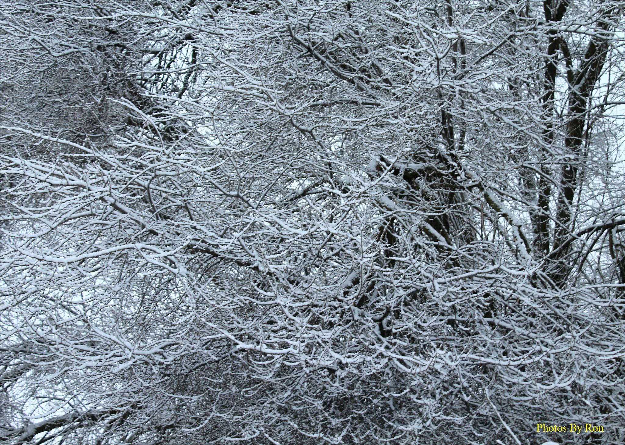 Photo in Nature #snow #tree #random shots