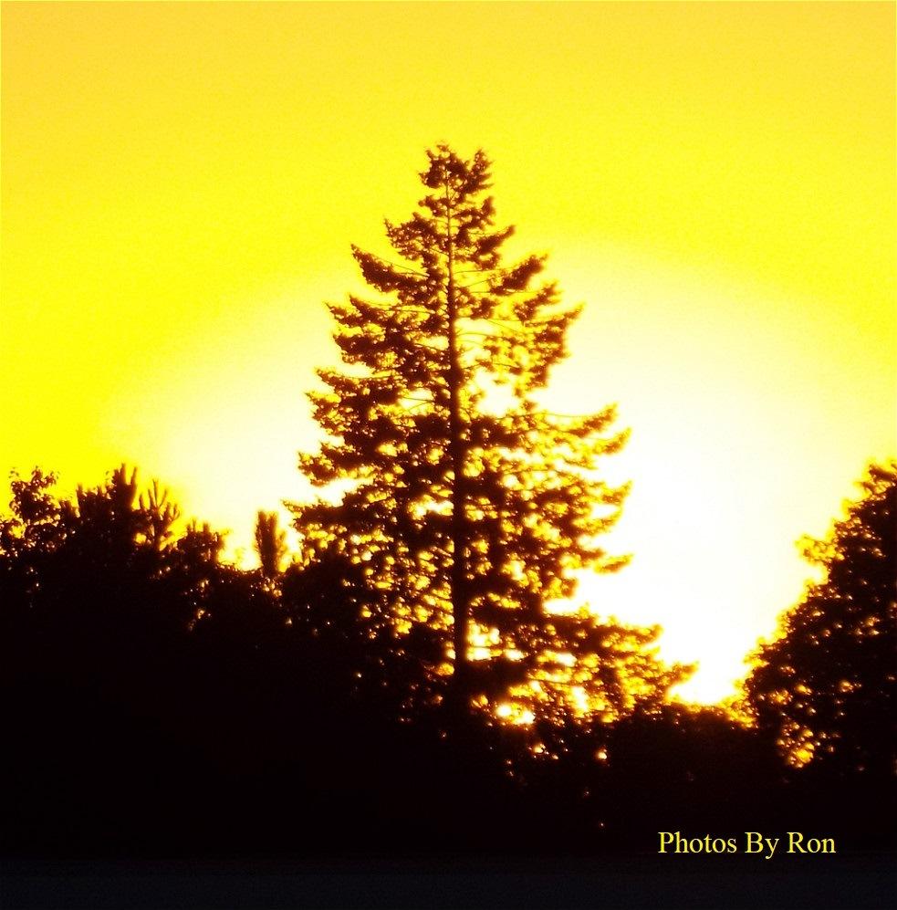 """Flame Tree"" by Ron Berkley"