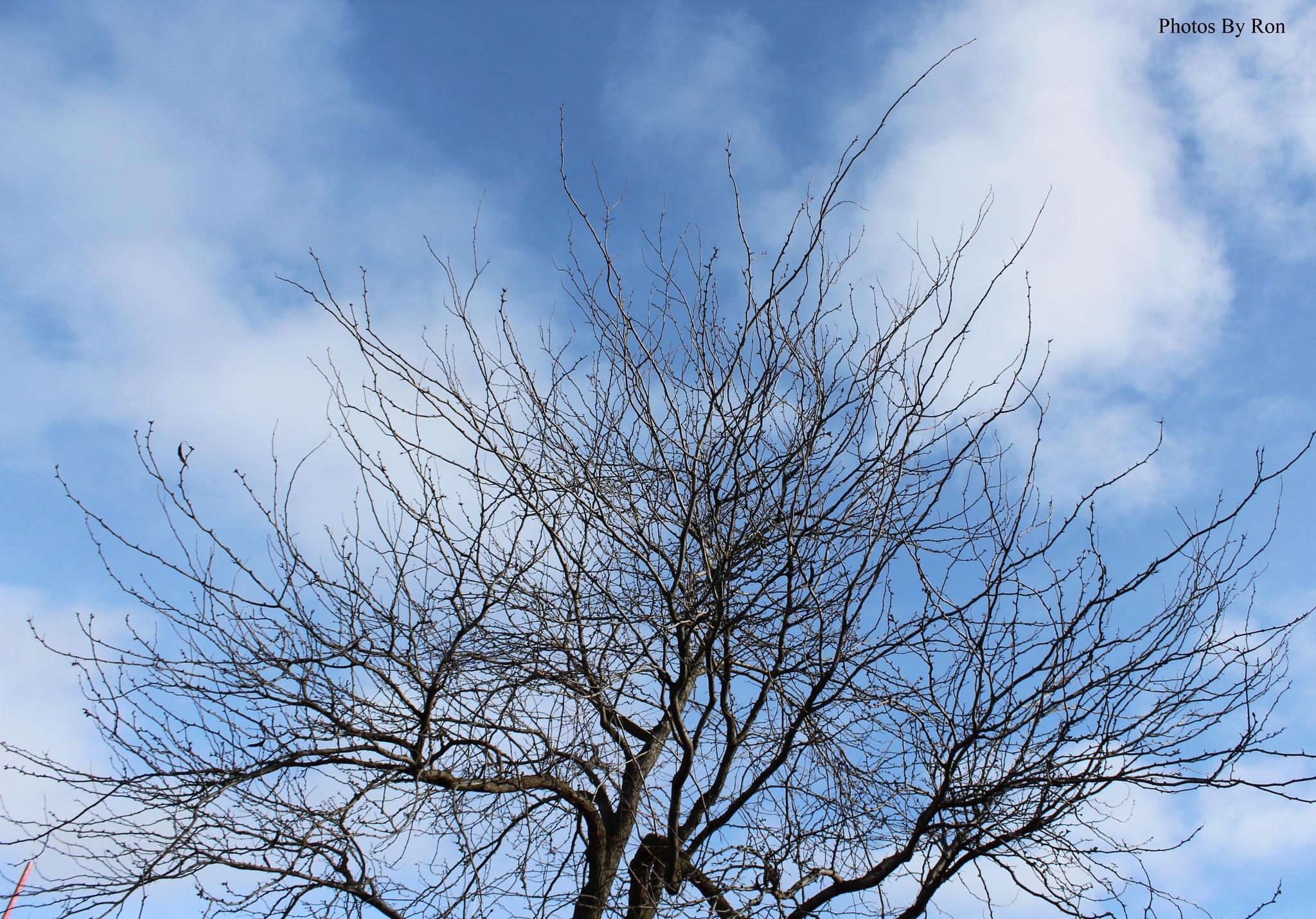 """Marbled Sky""  by Ron Berkley"