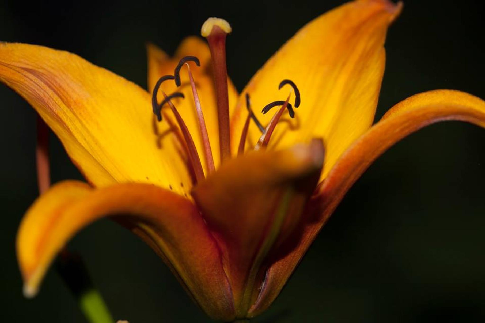 Flower in Bloom by Angeline Shepard