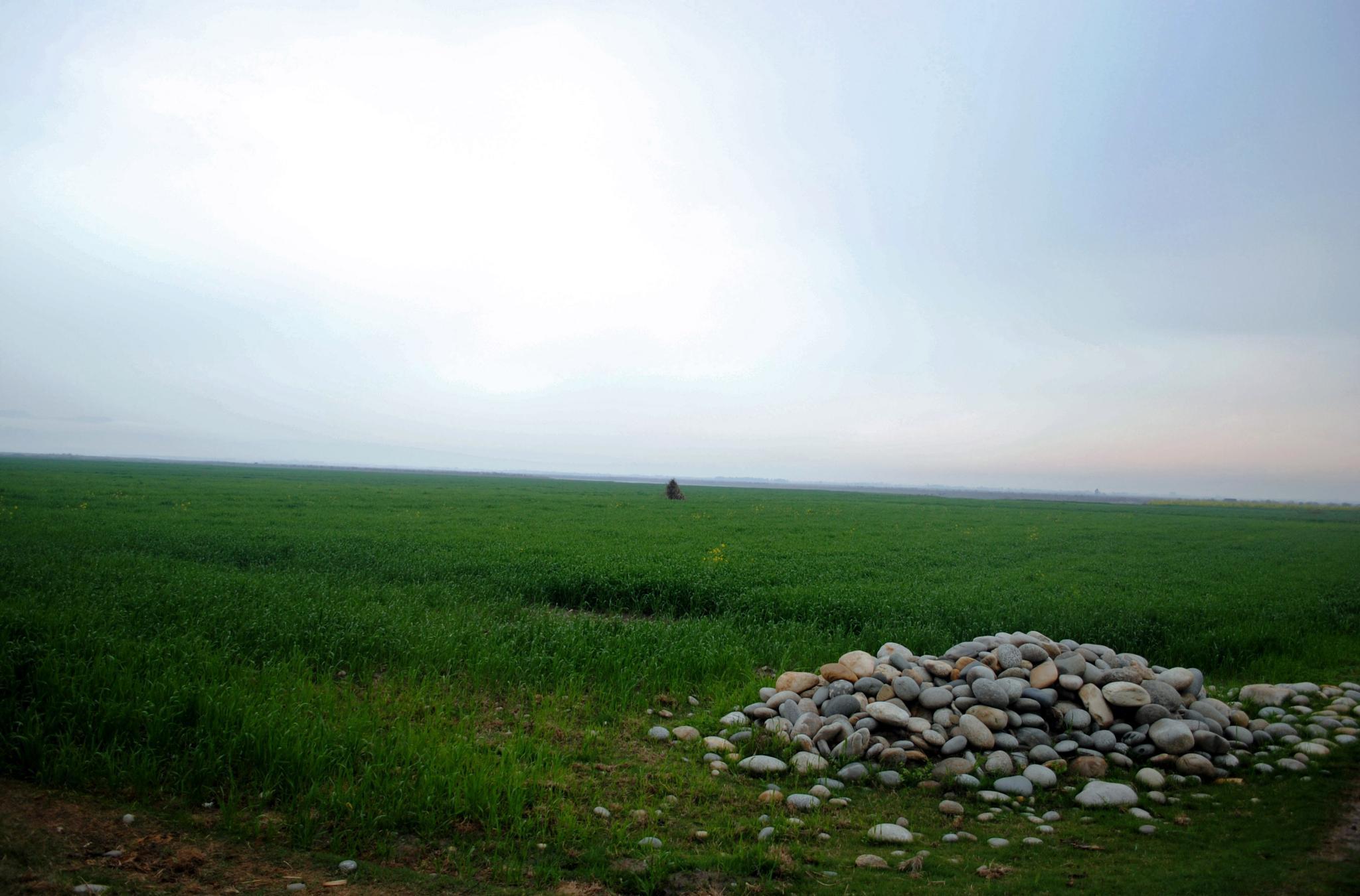 Green Field by ibrahim mahmood