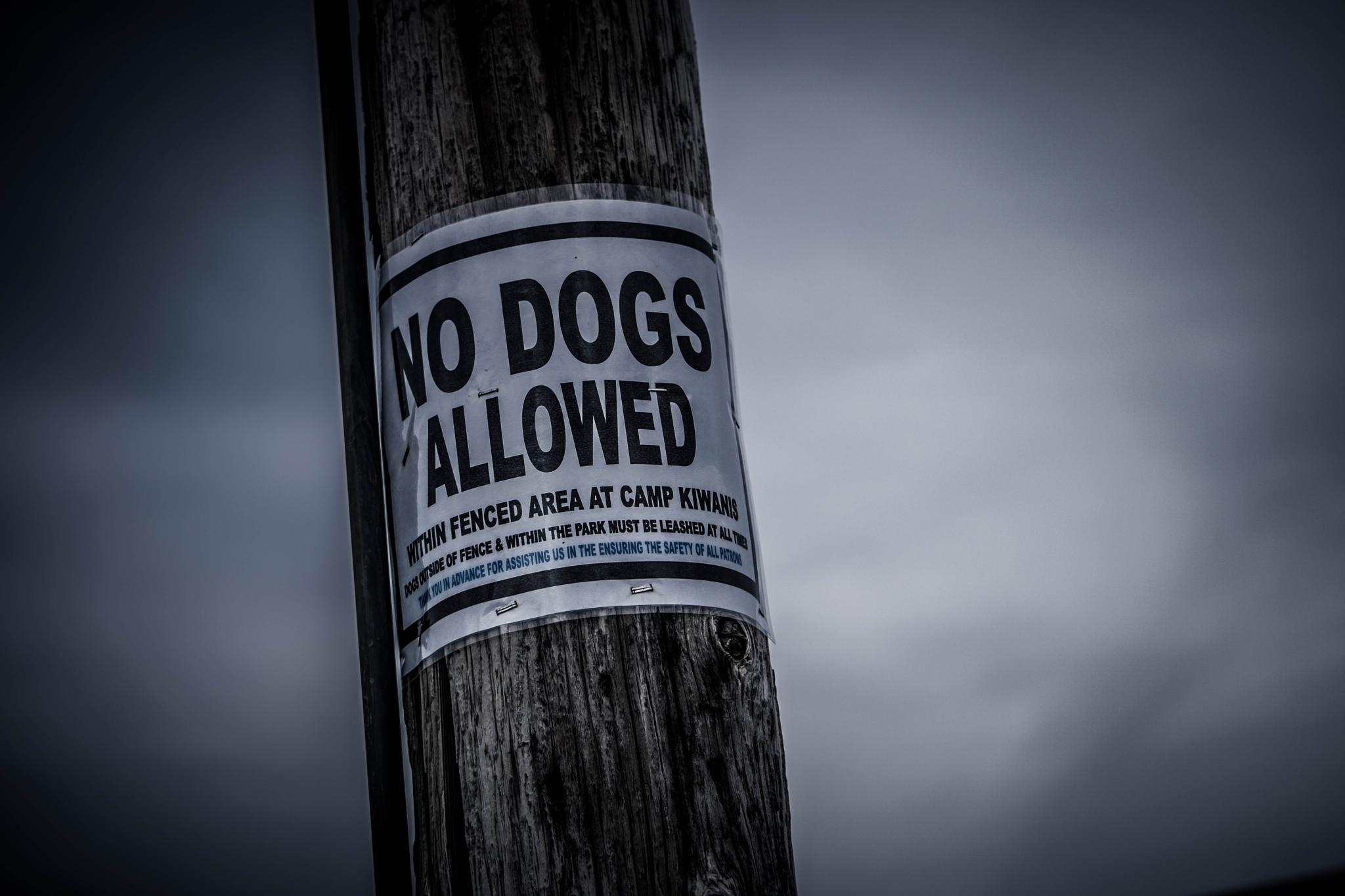No Dogs Allowed by Pam Stewart