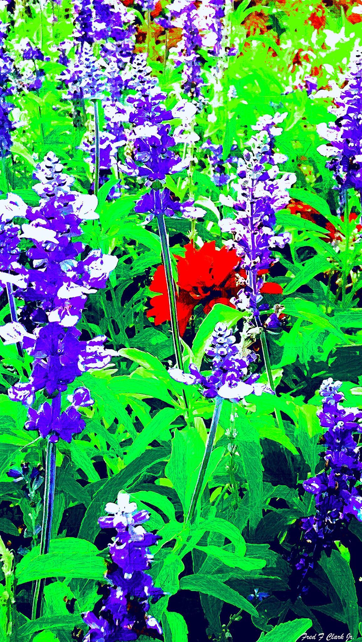 Red Flower In Purple by fred.clark.359