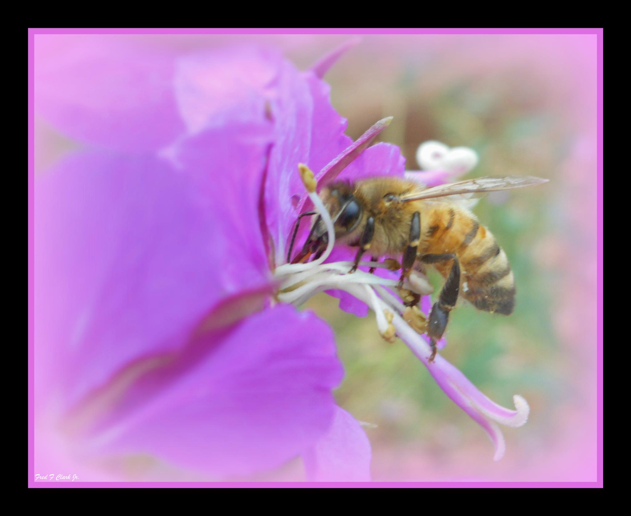 Bee on Purple by fred.clark.359