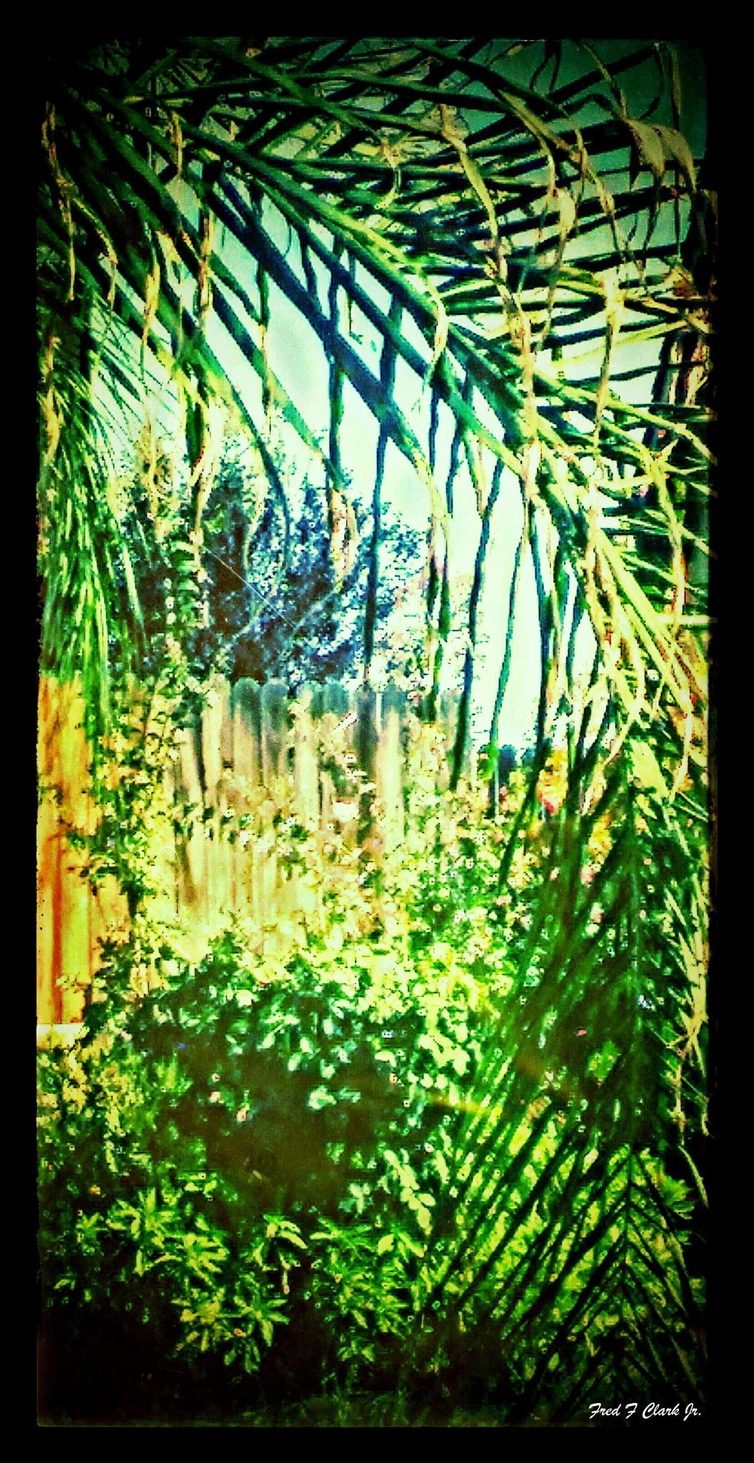 My Neighbor's Yard by fred.clark.359