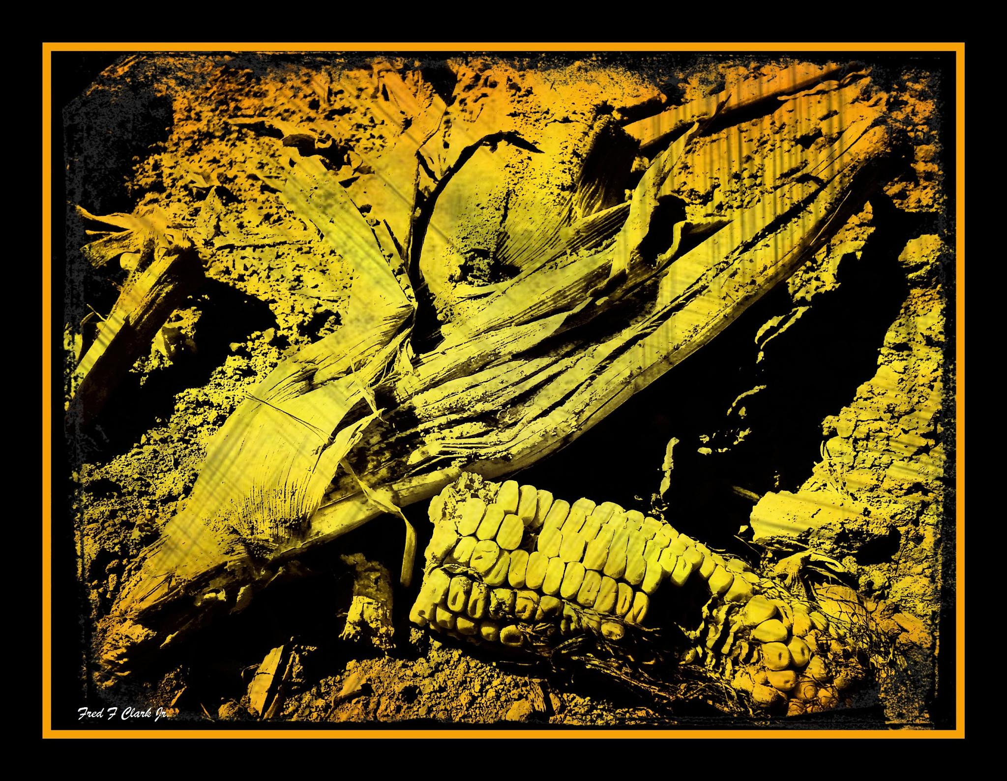 Corn by fred.clark.359