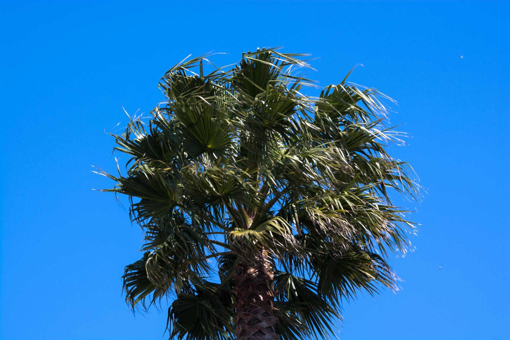 Palm tree canopy by mariofotografia1