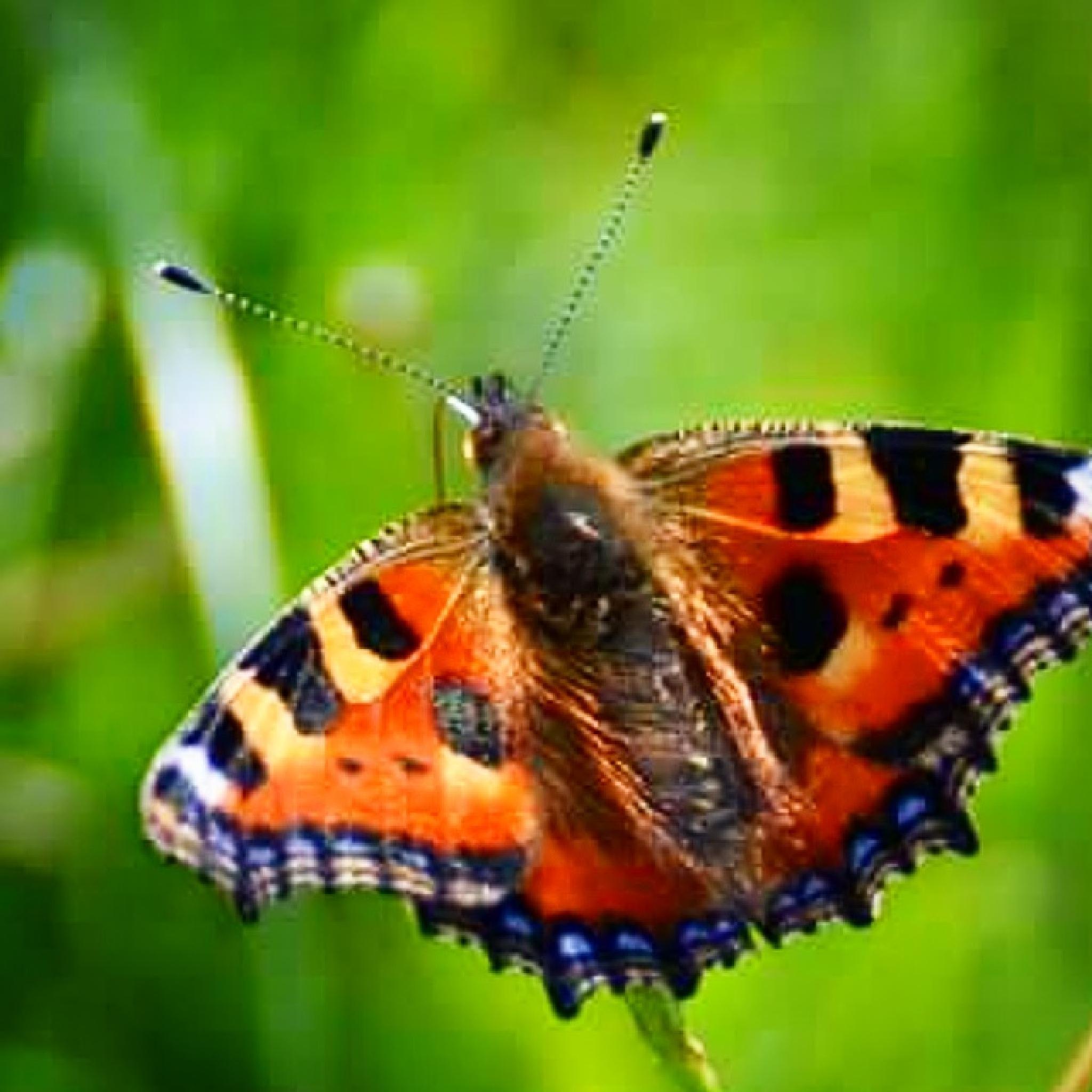 Butterfly  by bjorn.marsland