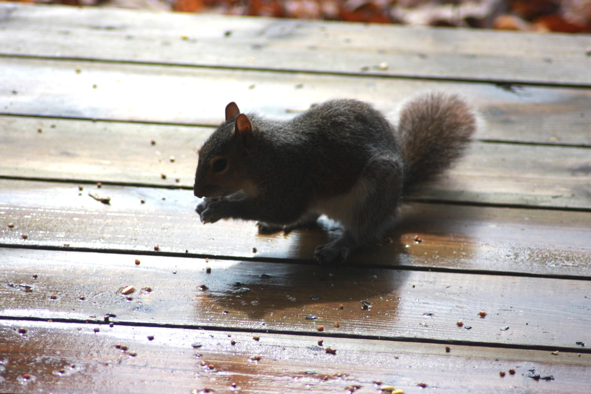 Photo in Animal #squirrel #morning #seeds