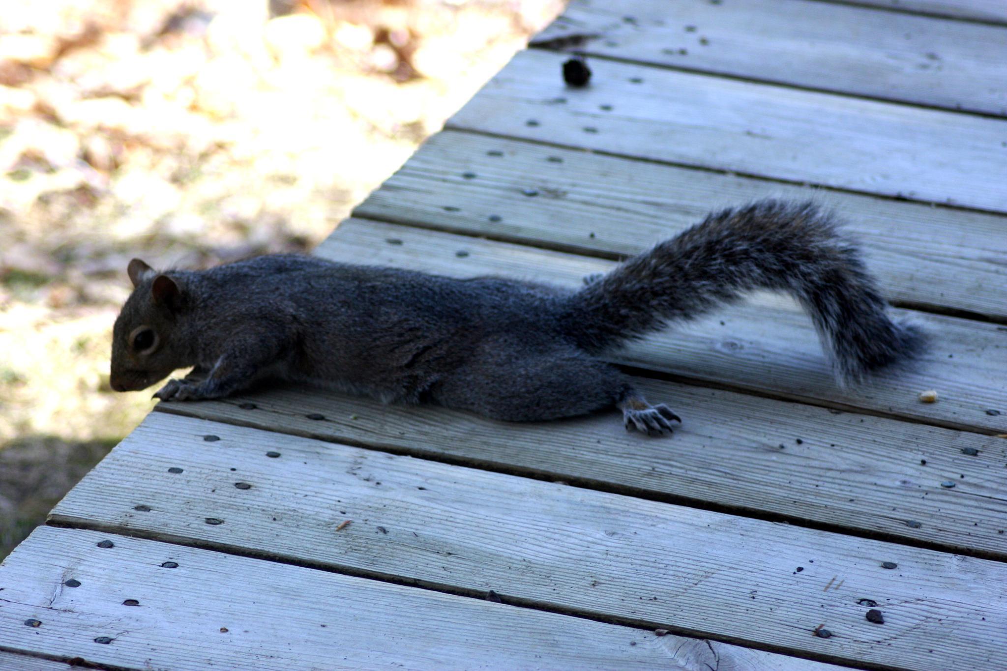 Curious squirrel by Jaroslav Reznicek