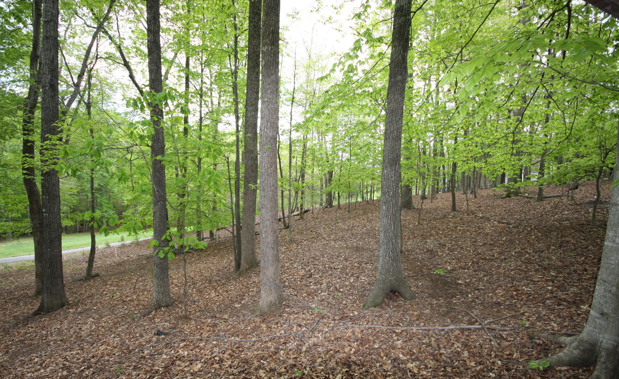 Photo in Random #forest #house #neighborhood